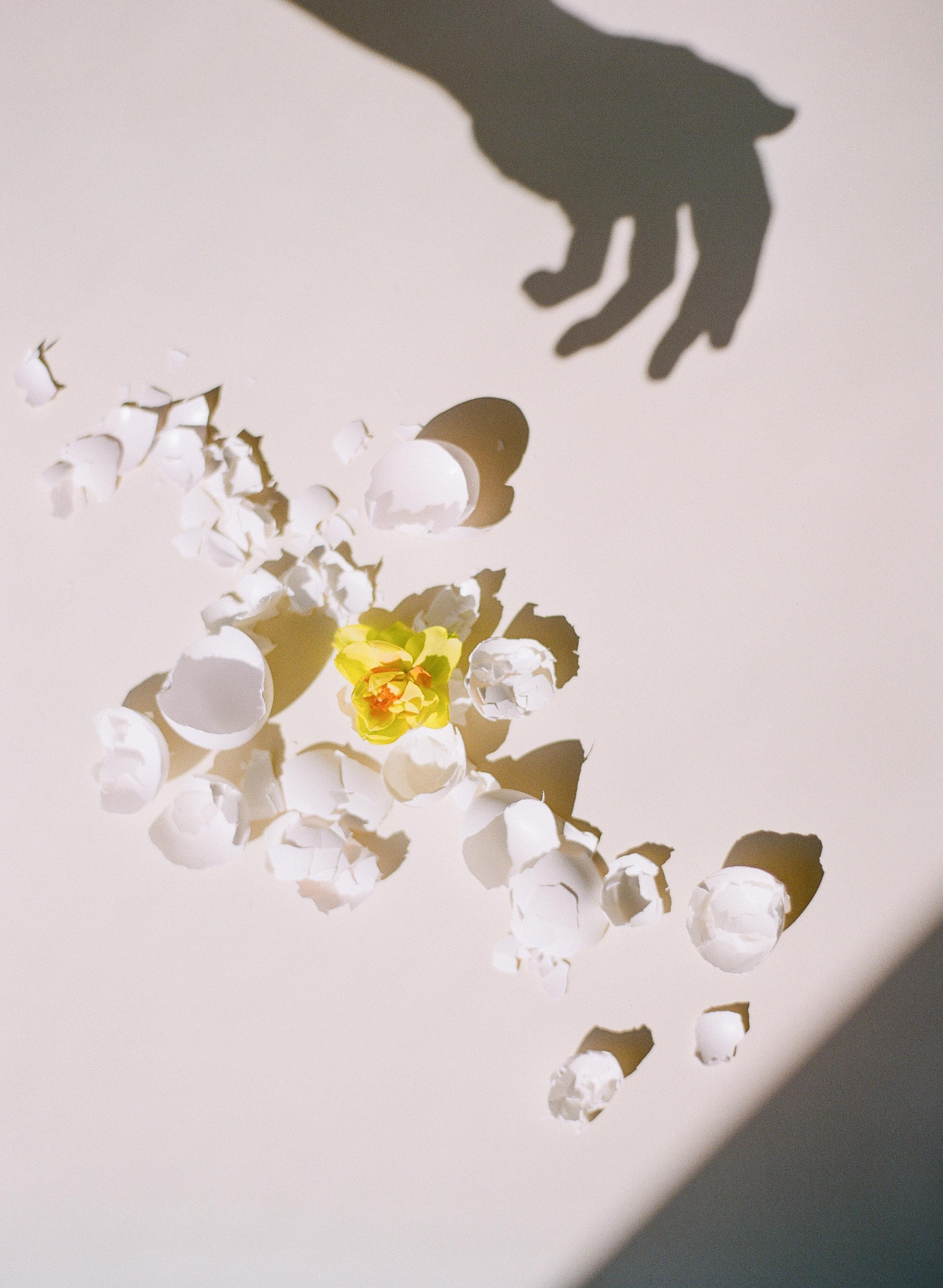 006_FriedEggs&Flowers.jpg