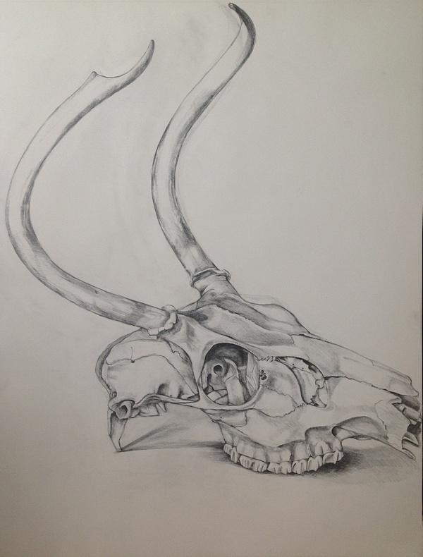 DeerSkull.jpg