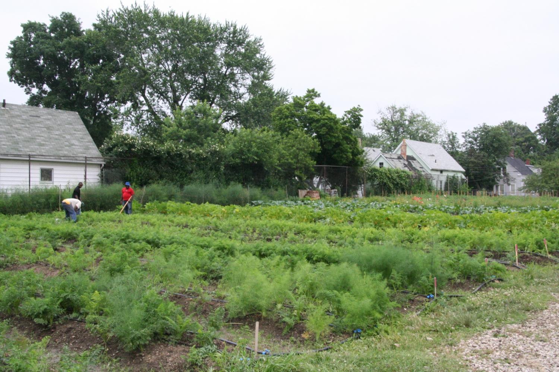 CBG Green Corps Central Learning Farm 3.JPG
