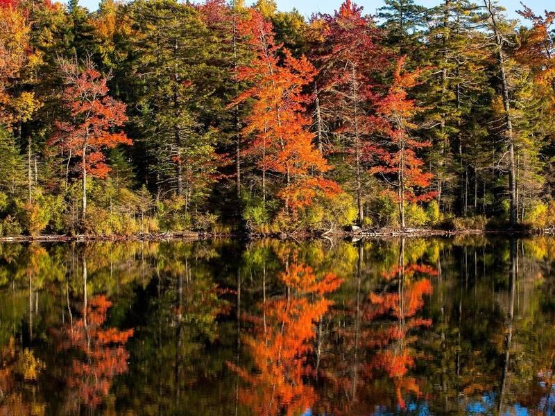 fall-foliage-shutterstock-1536414505-1372.jpg