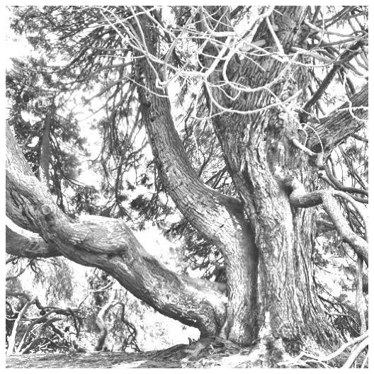 #5 Trees Rae-Grant.JPG