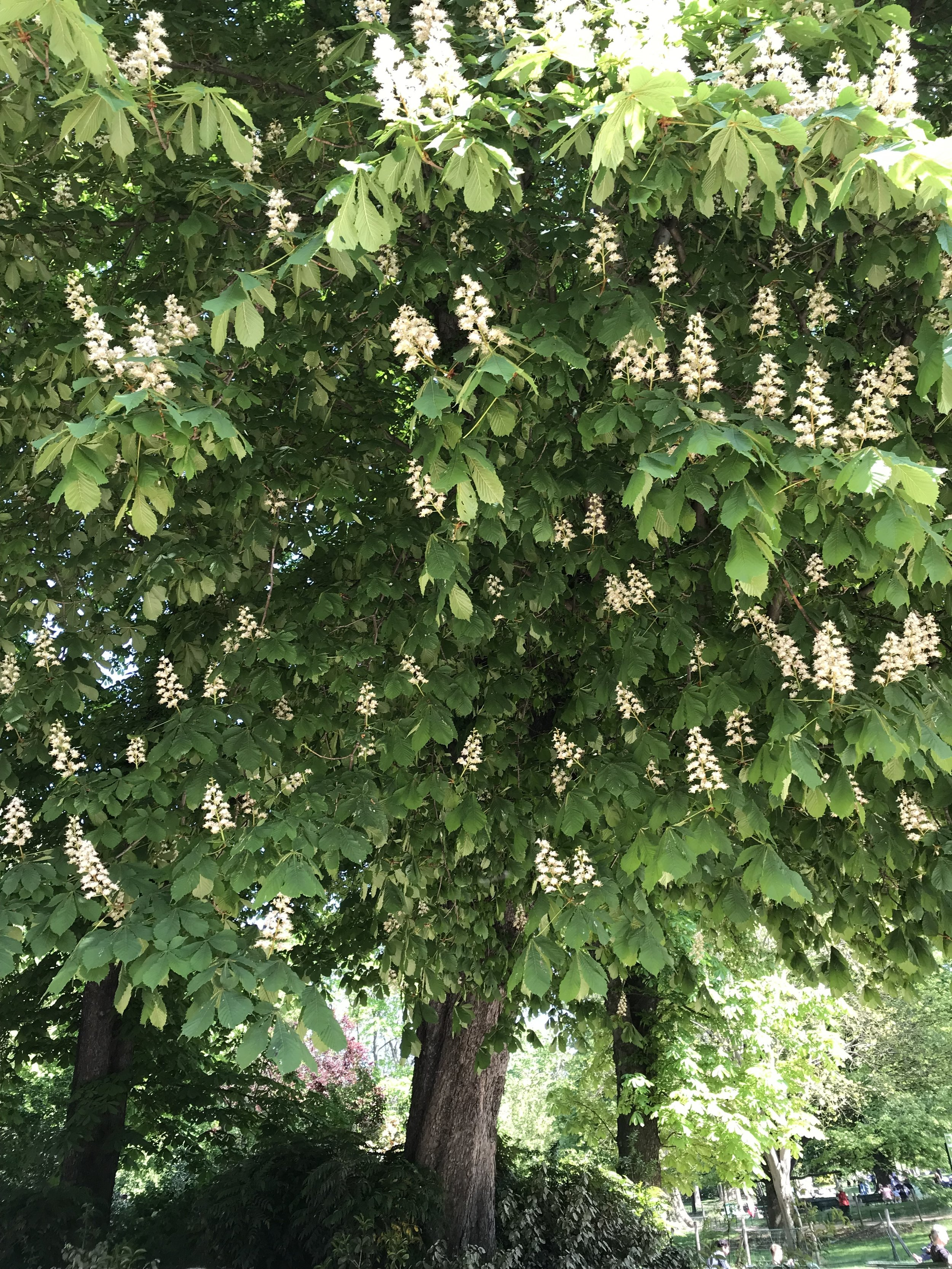 The picture above is an European chestnut but it also provides beauty, food and shelter.