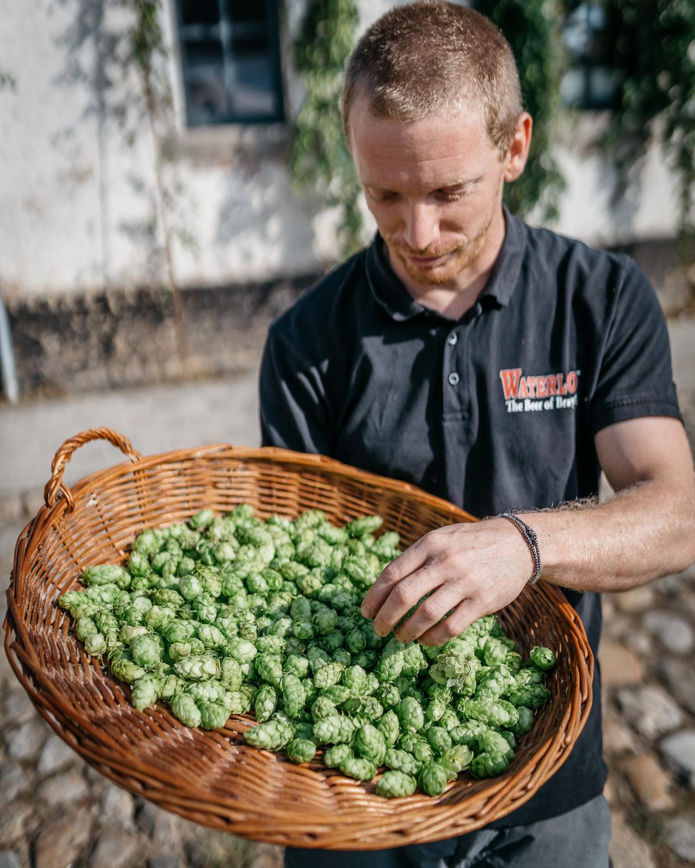 sqsp-hop-harvest-20190830-08886.jpg
