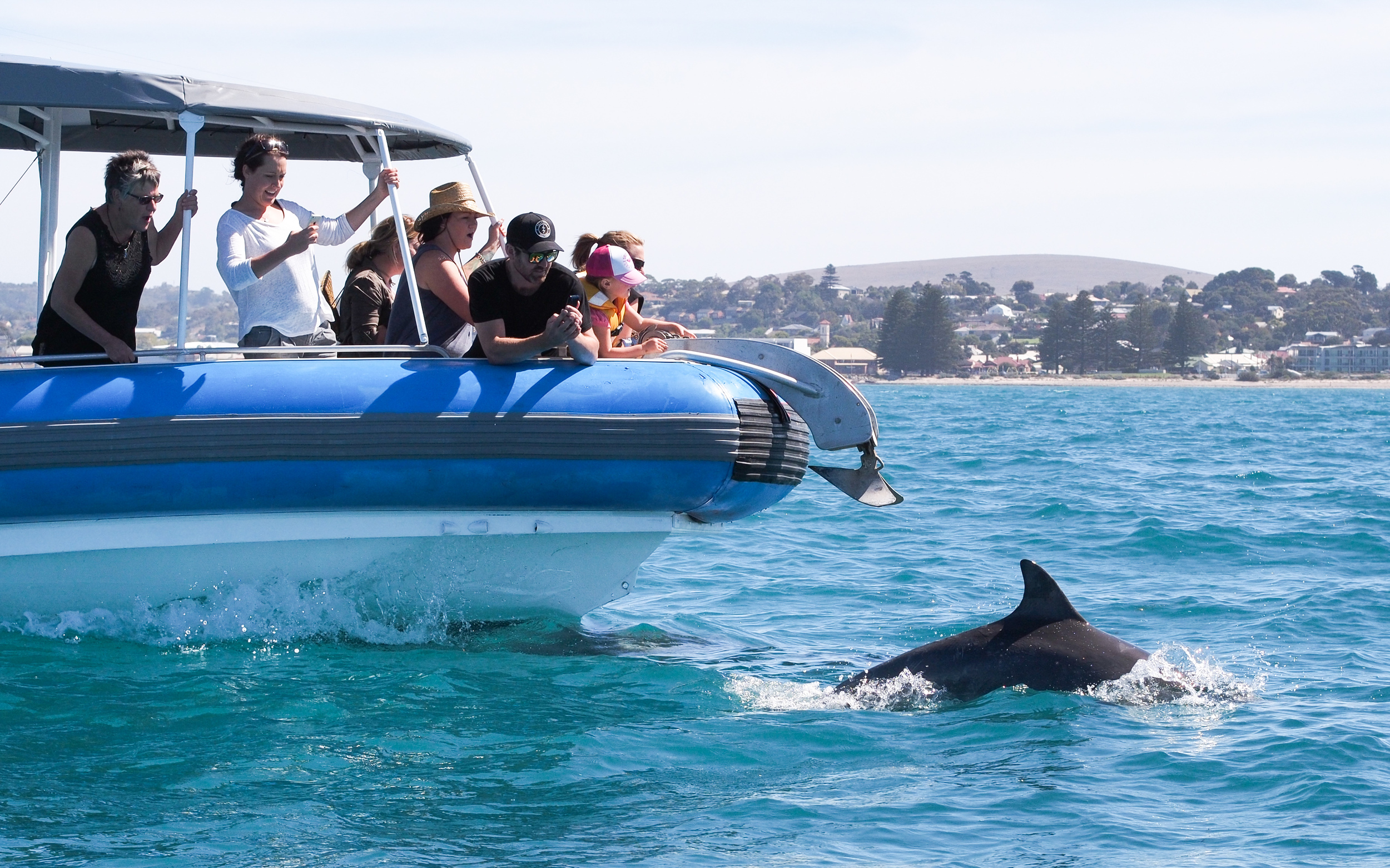 The Big Duck passengers with swimming dolphin
