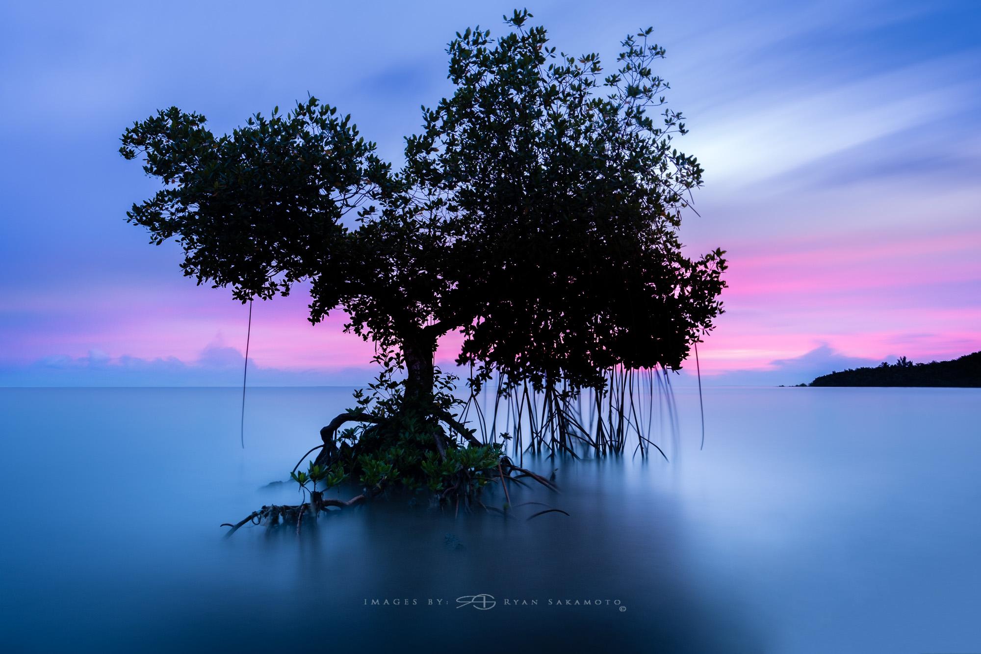 THE WAIAHOLE TREE...12.04.16