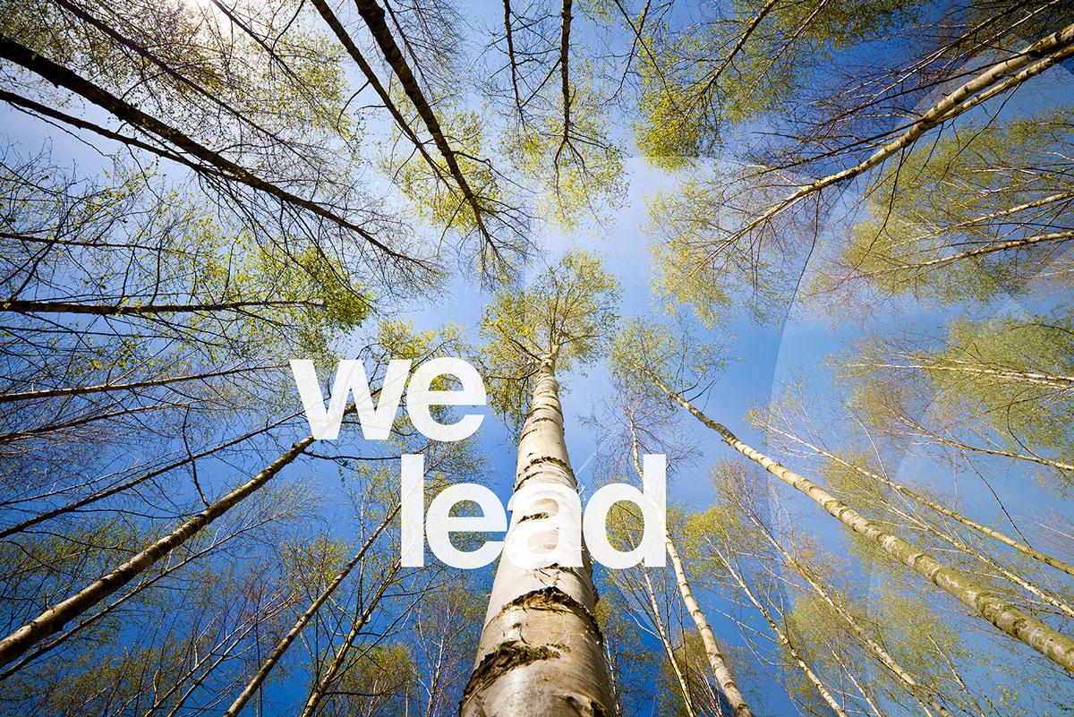A_we-lead_trees_sm.jpg