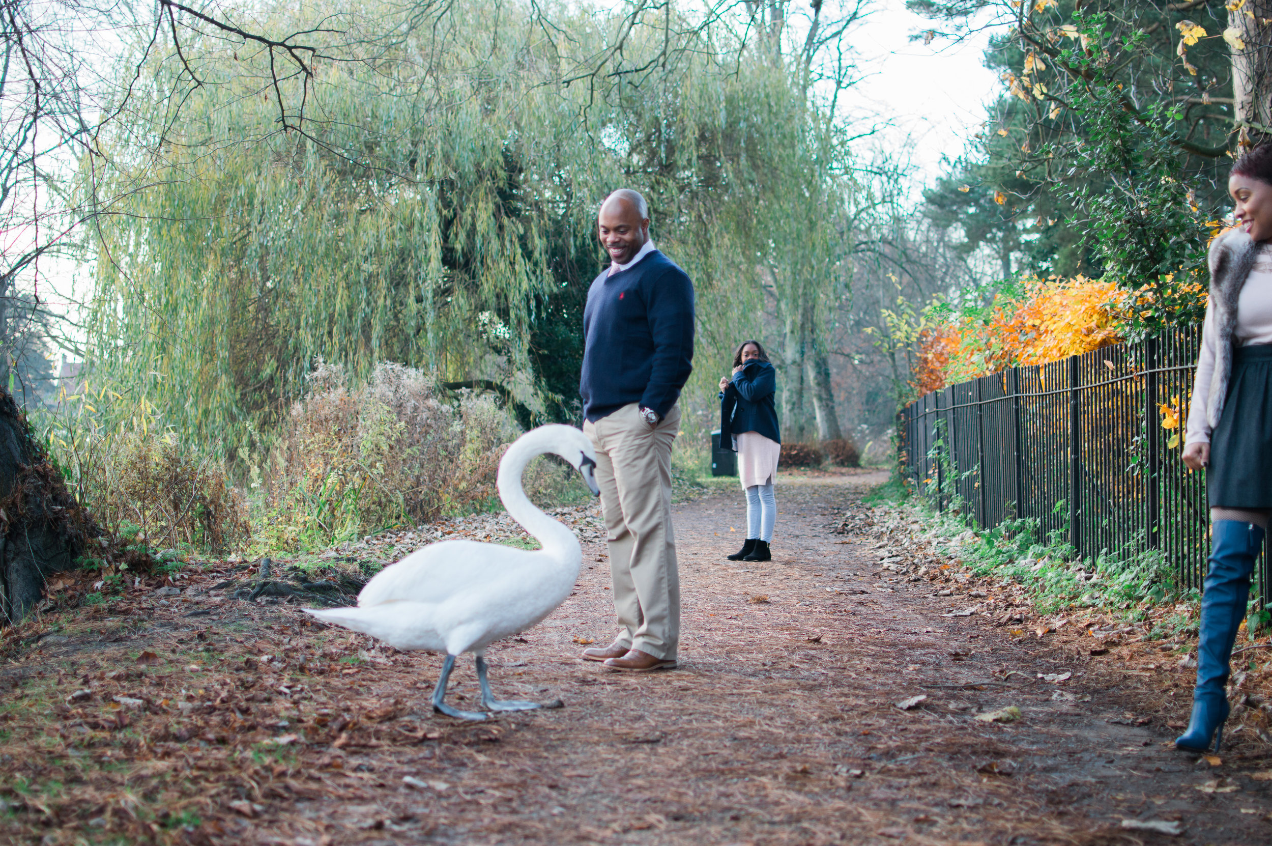 I mean this swan was HUUUGE.