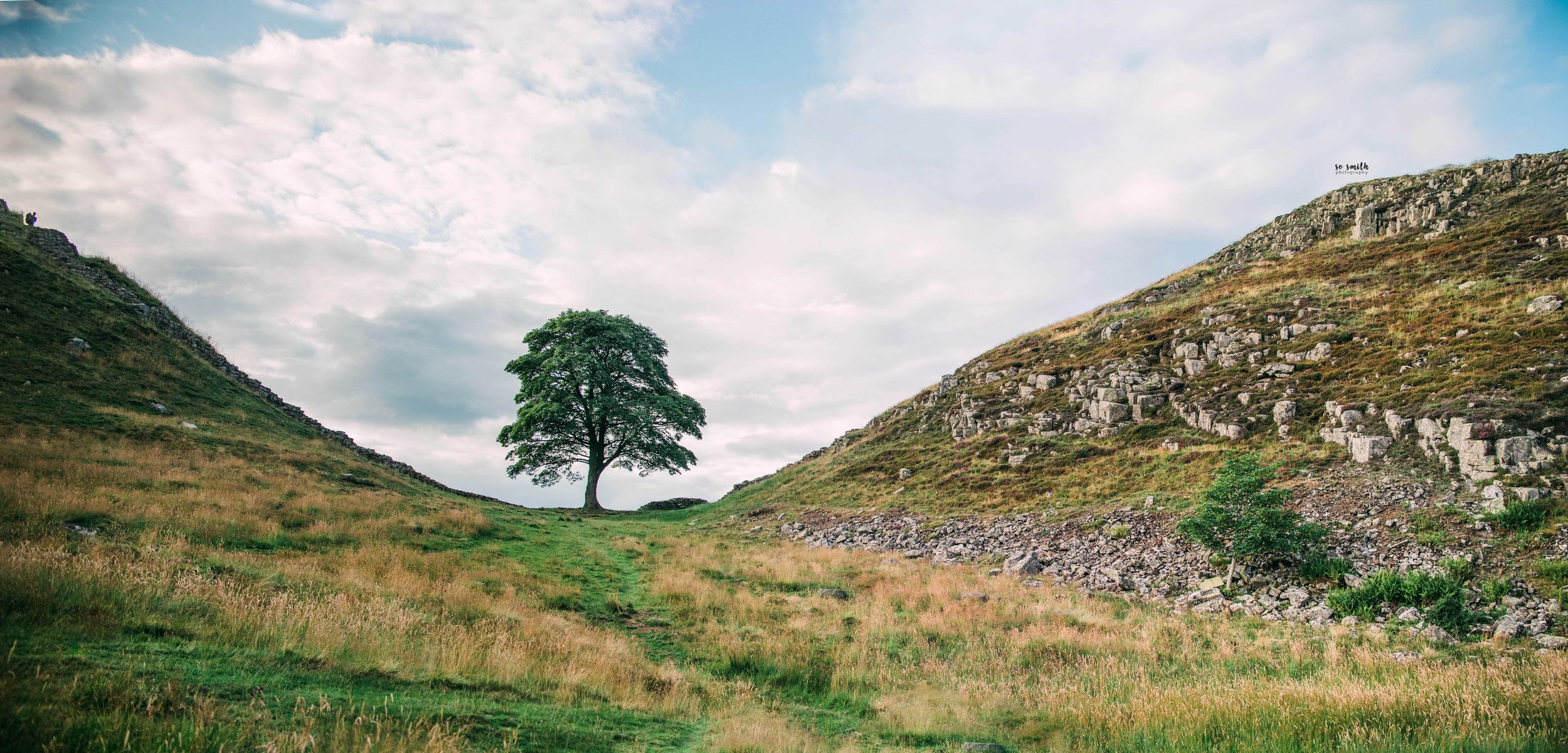 Sycamore Gap - Northumberland, UK