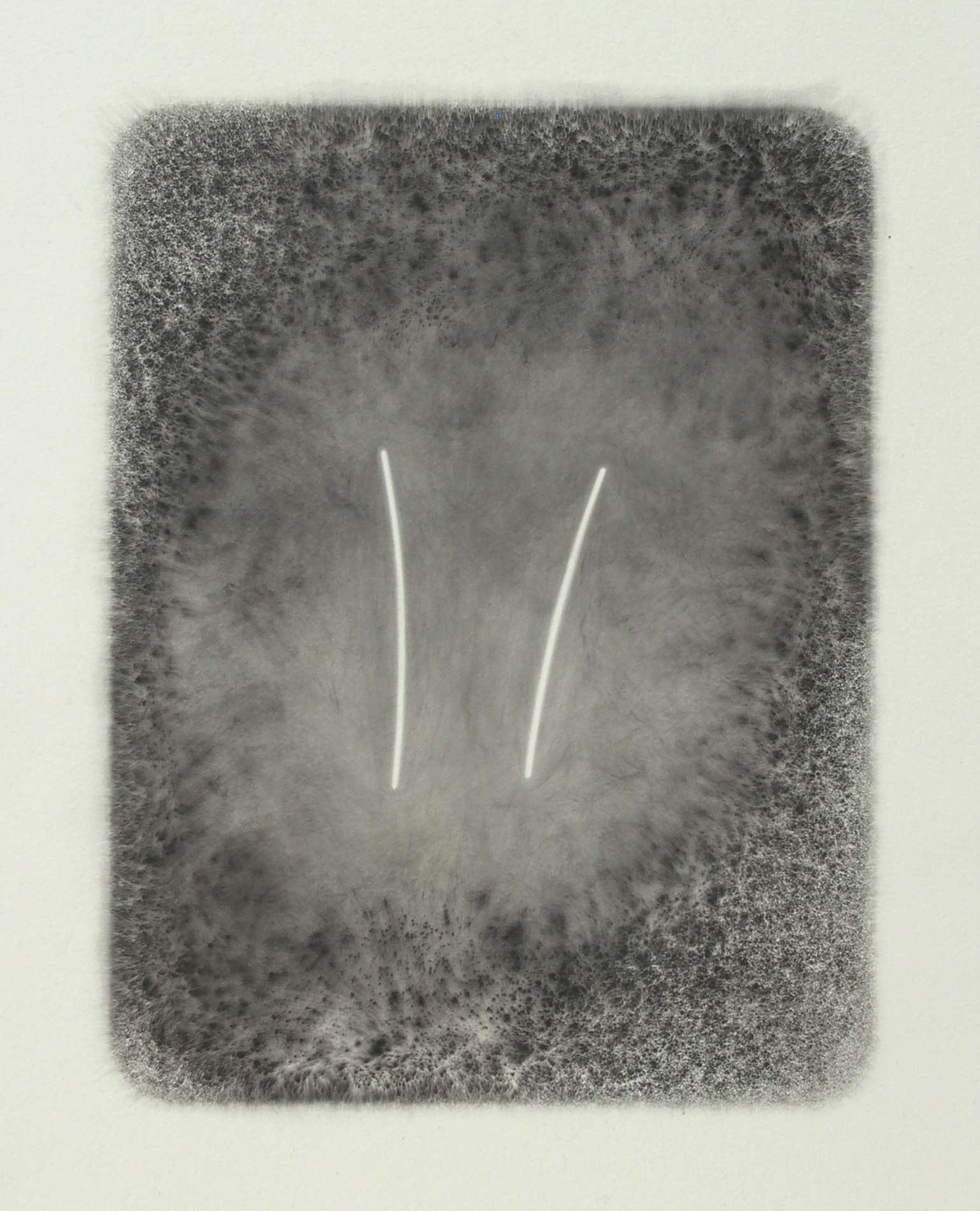 DREAMING (I) 2006  carbon deposit on 100% cotton fibre  56.3 x 34.5 cm