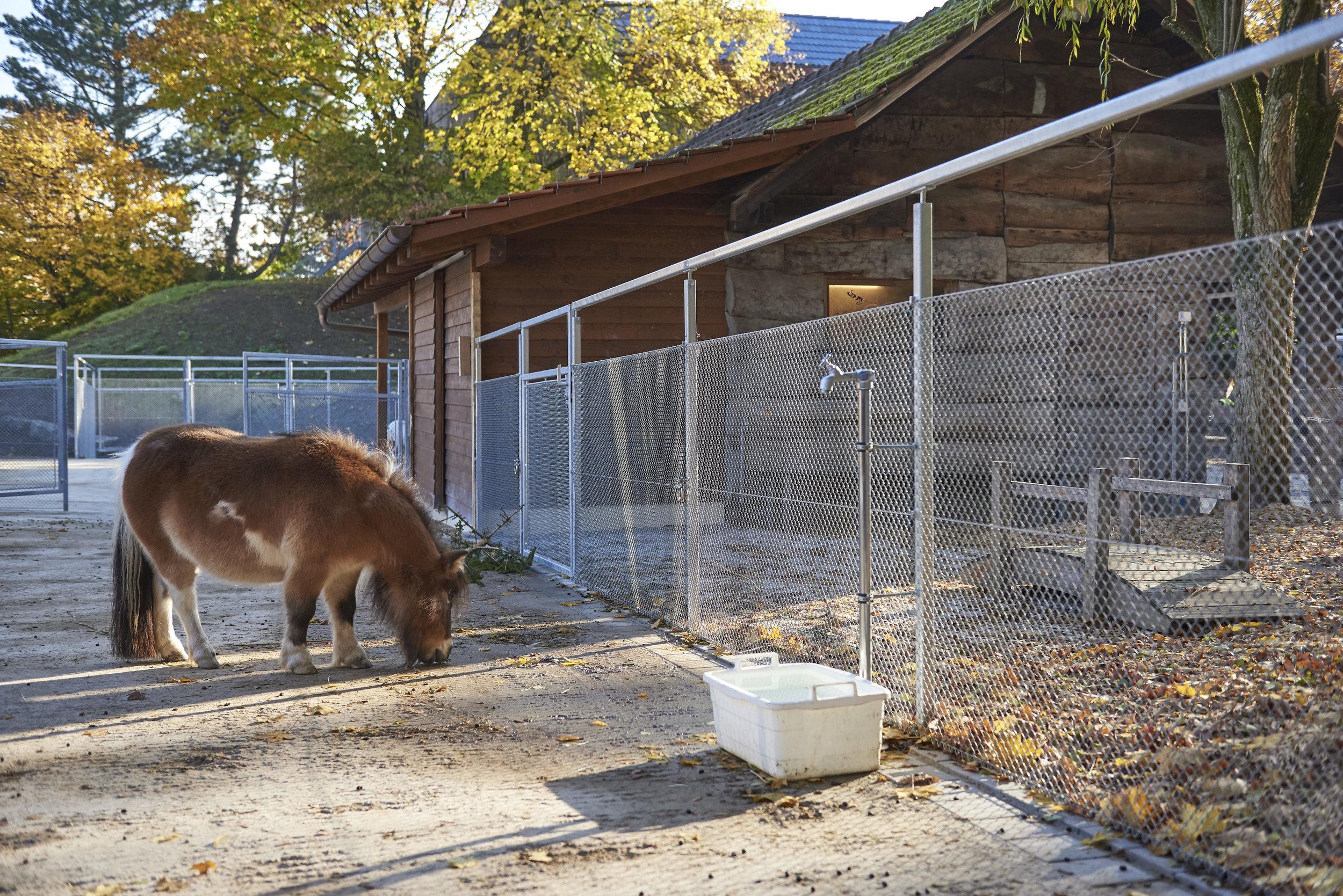 Zaun mit Diagonalgeflecht für Tiergehege