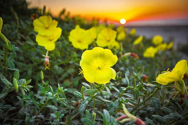 Good morning, Galveston! #galveston #galvestonbeach #beach #beautifuldestinations #summer #sunrise #landscapephotography #sunday #texas #texastourism #inspire_texas_now #inspire_nature_now