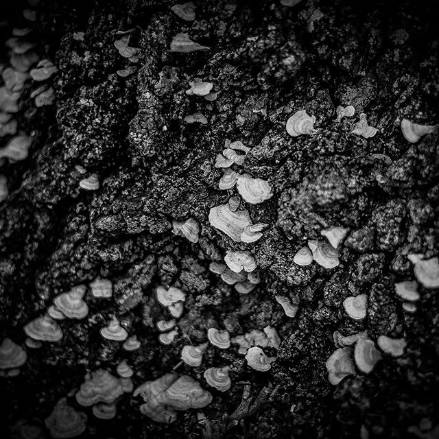 I'm not sure what these little organisms are called, but they sure make for a good abstract B&W.  #blackandwhite #tree #texasgram #texasmonthly #natutephotography #texas #texasgram #inspire_texas_now #inspire_nature_now #camping #hiking #PrecisionCameraATX #throughherlens