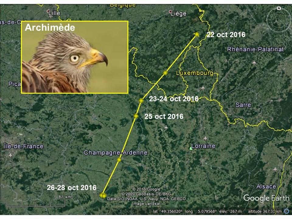 Départ en migration d'Archimède, qui semble peu pressé malgré qu'il soit parti un mois plus tôt qu'en 2015