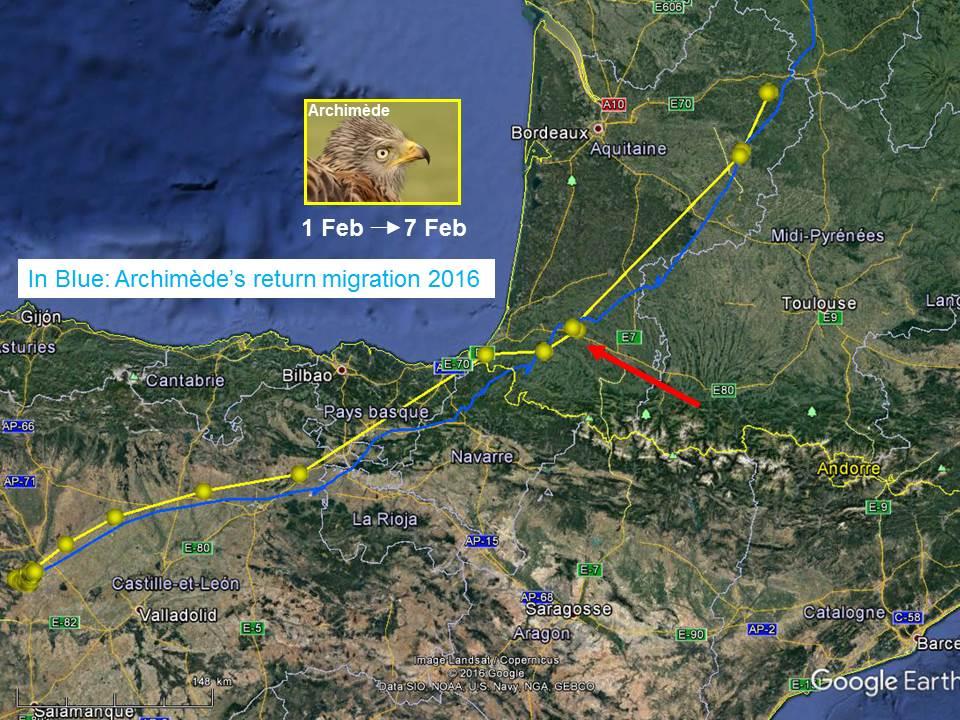 Trajet de retour 2017 d'Archimède (en jaune), jusqu'au 7/02. En bleu, son trajet de 2016. La flèche rouge indique le village de Saint-Girons-en-Béarn, où il a dormi dans le même bosquet à un an d'intervalle.