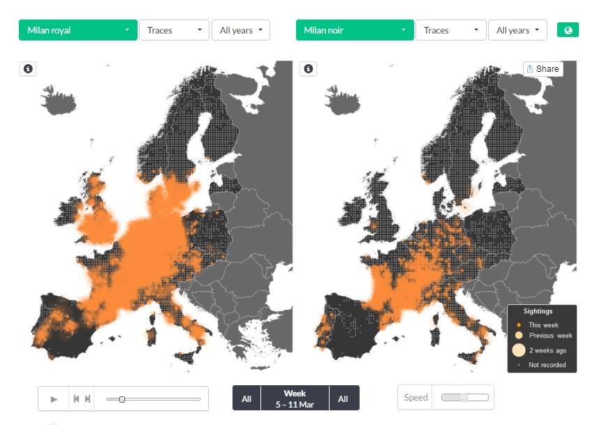 Comparaison de la situation en début mars de la migration du Milan royal à gauche et du Milan noir à droite, qui commence seulement à arriver dans nos régions. Cliquez sur l'image pour accéder à la page en live.