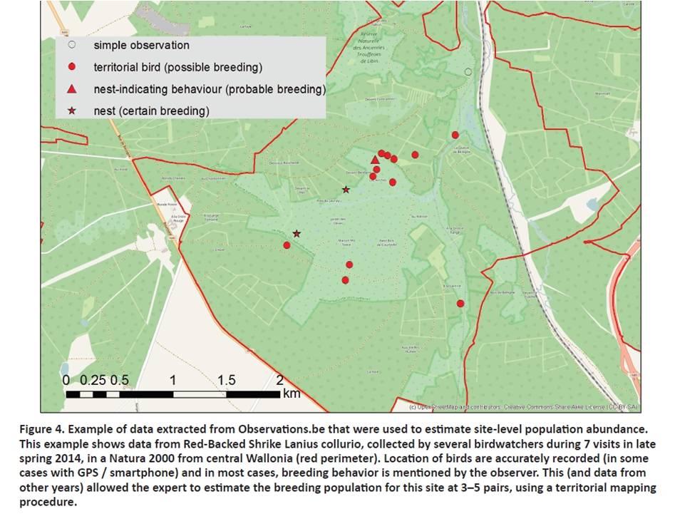 Figure extraite de l'article de Bird Census News : comment les données d'Observations.be sont mises à profit pour estimer l'effectif nicheur d'une espèce Natura 2000, la Pie-grièche écorcheur, dans un site ardennais.  La localisation précise de vos observations sur Observations.be est fondamentale !