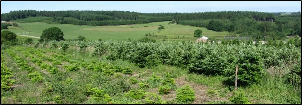 Parcelles de sapins de Noël et prairies pauvres en haies, en Ardenne. (Photo : Robin Gailly)