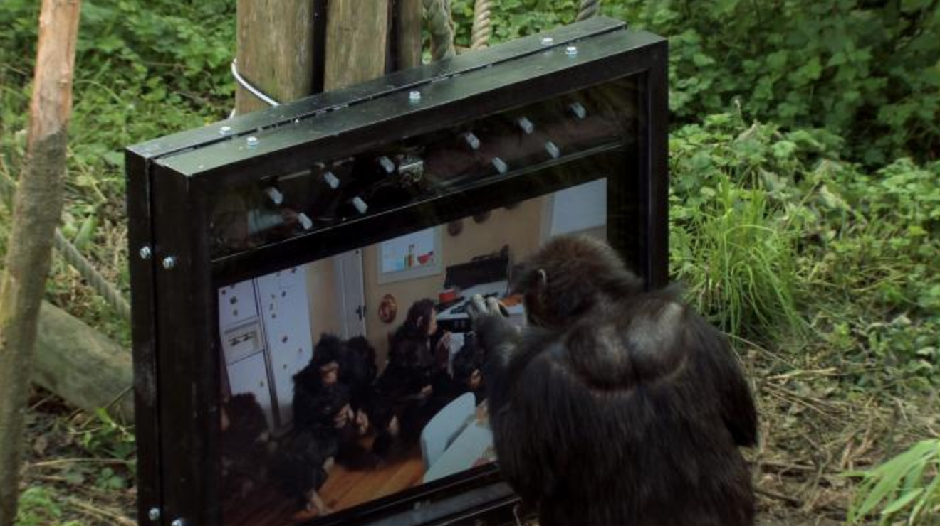 -      Rachel Mayeri, Primate Cinema: Apes as Family, (still) 2011 cindy kitchen