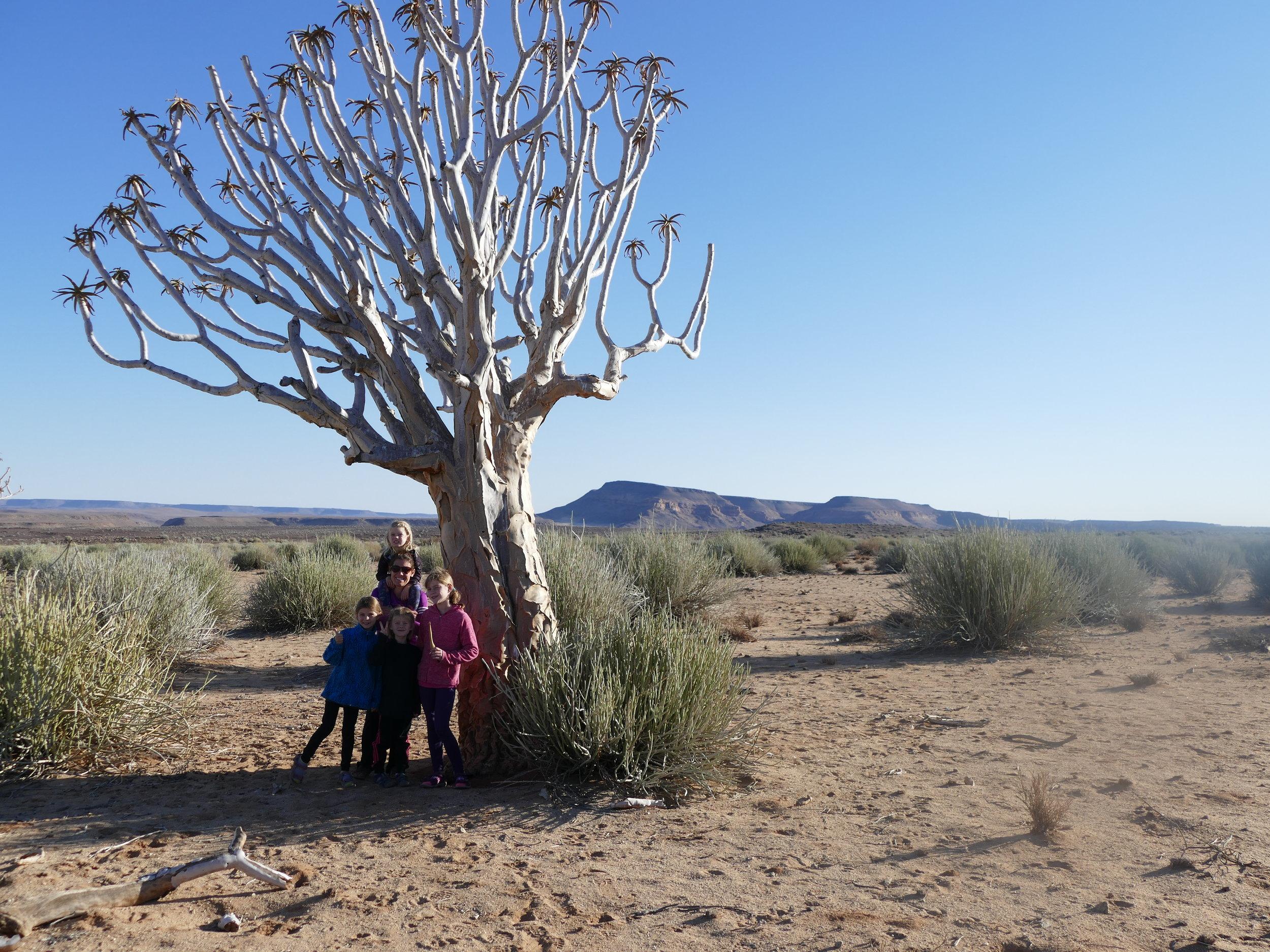 Magnifique Namibie, on se reverra..