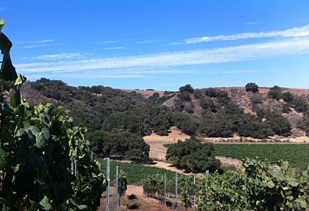 LBC Vineyard G blk looking down on I blk and L blk.JPG