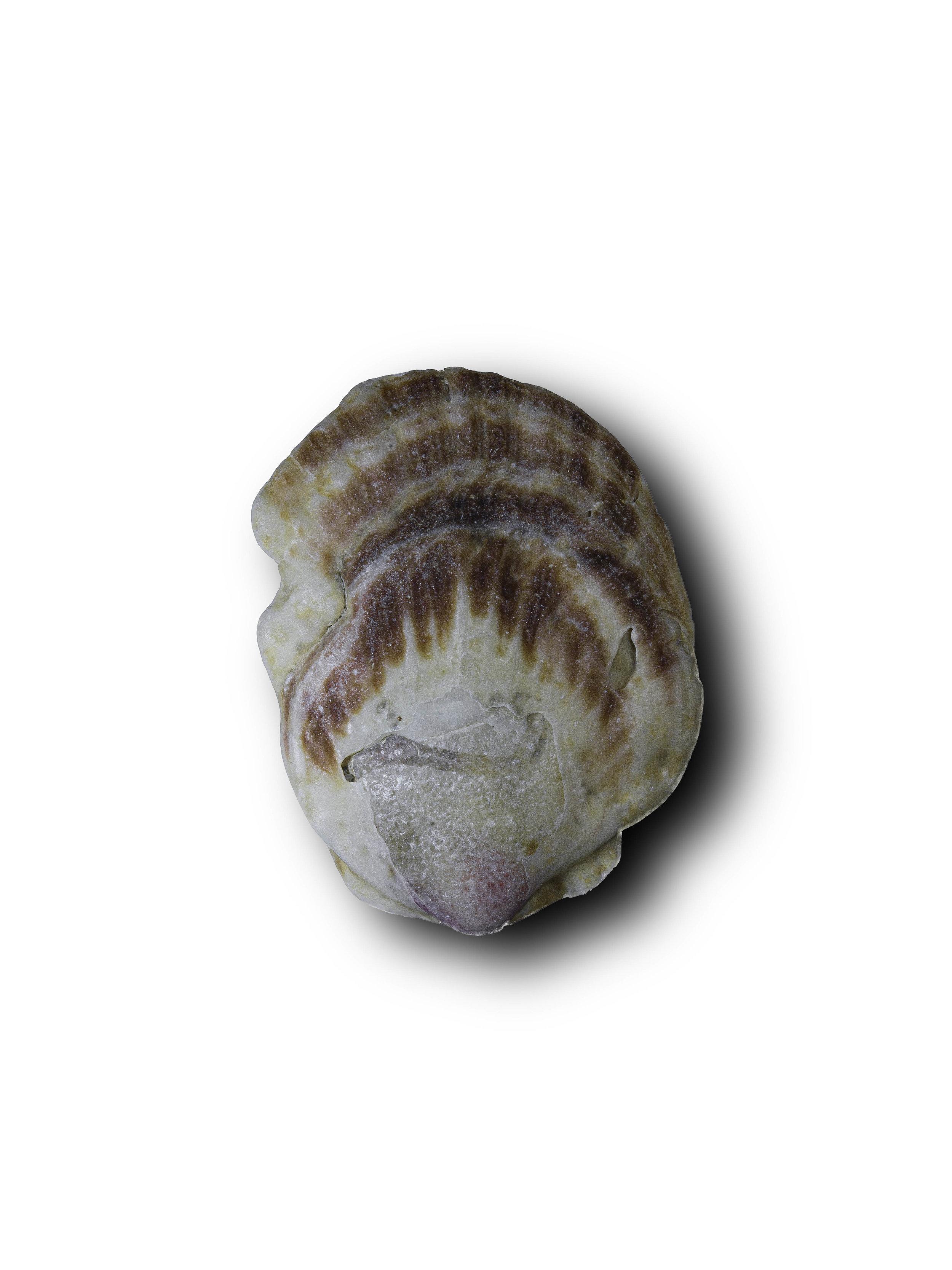 Seashell5.jpg