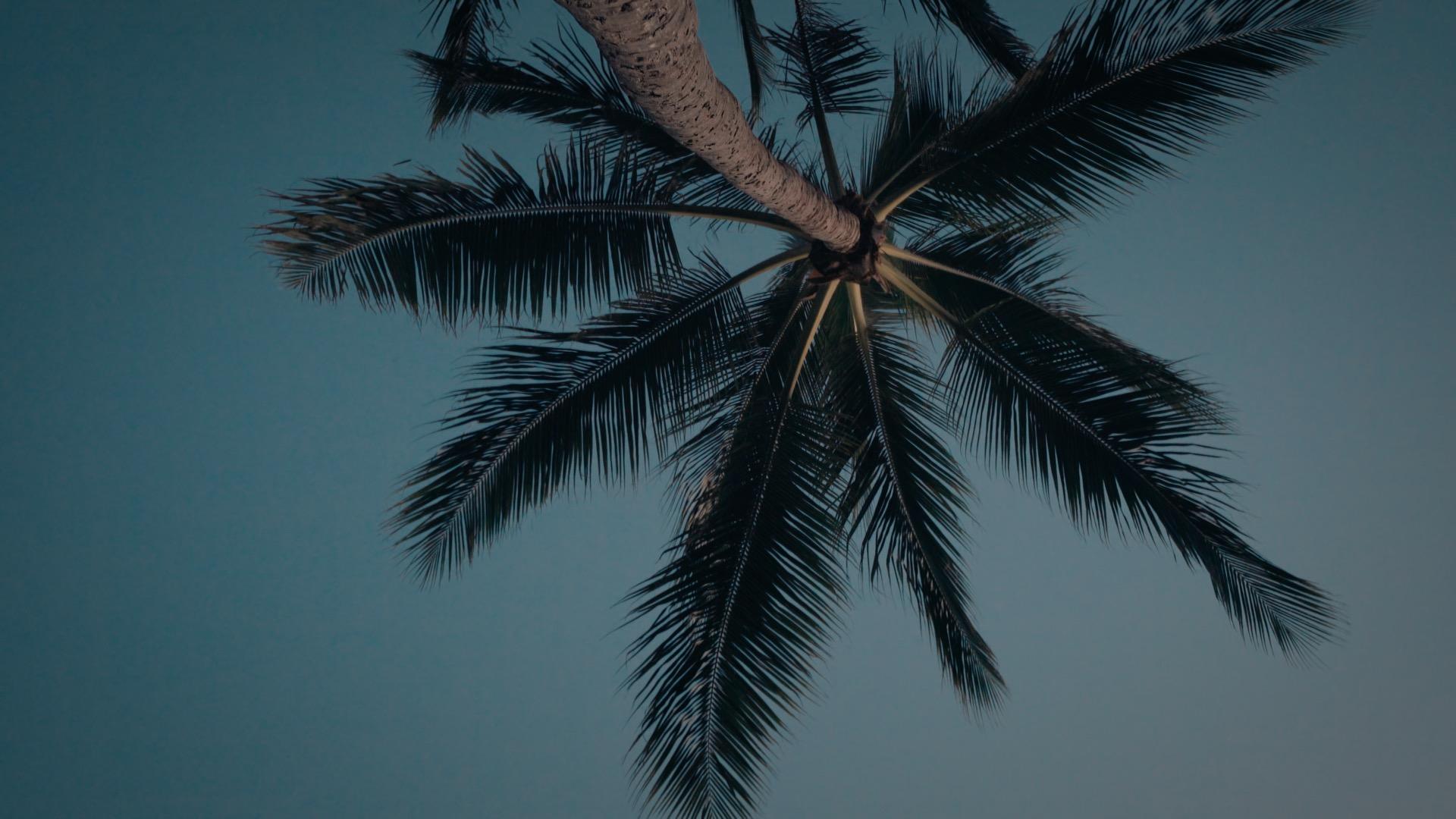 VMC-Palms-02-HD STILL-0.jpg