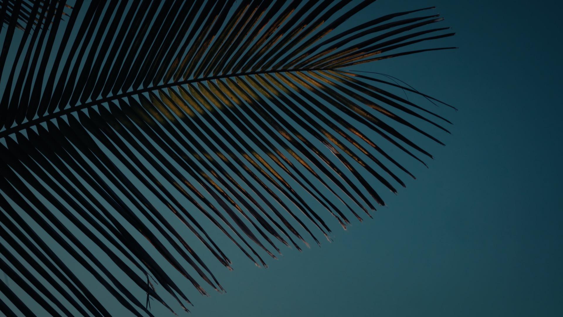 VMC-Palms-06-HD STILL-0.jpg