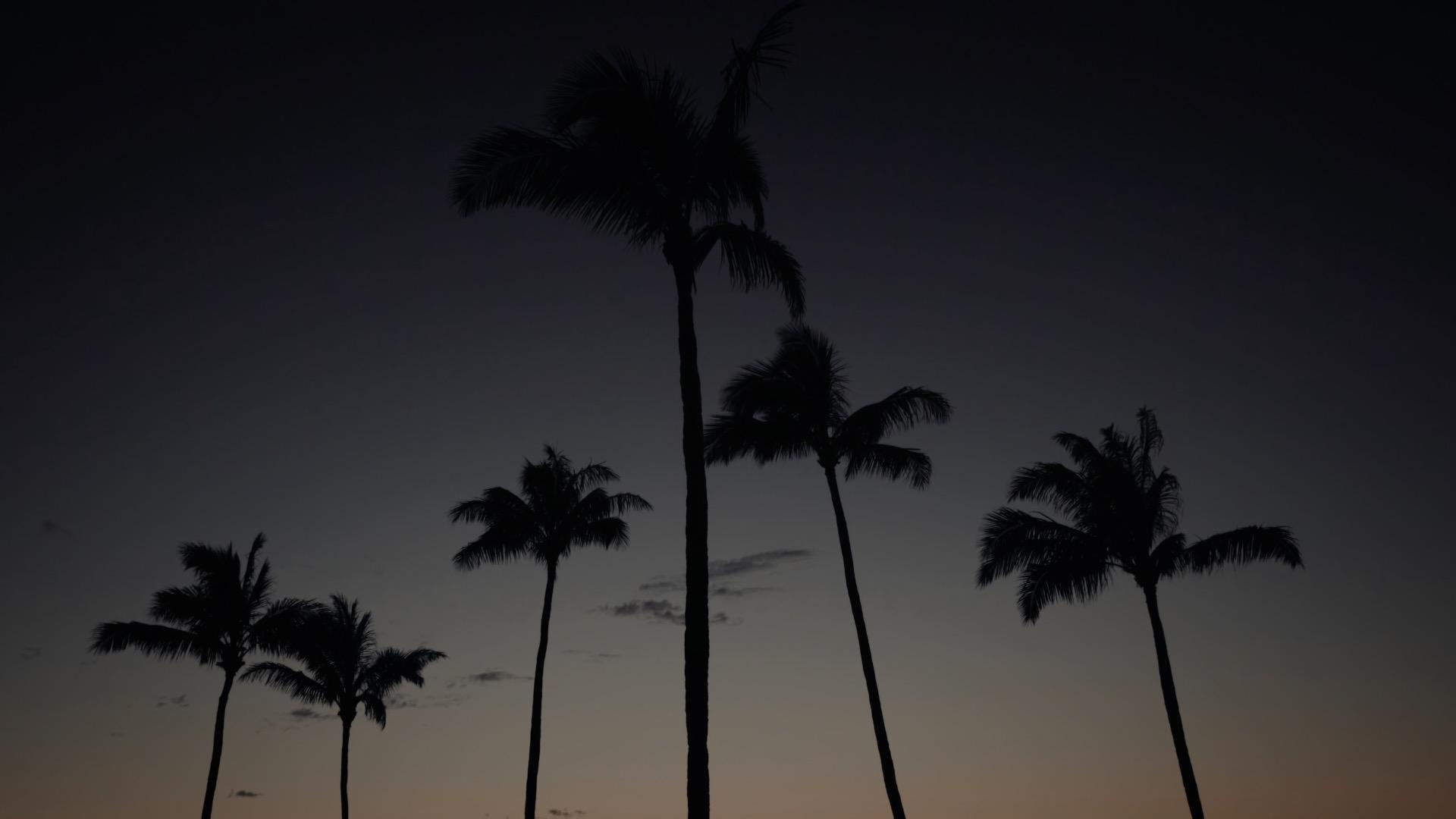 VMC-Palms-08-HD STILL-0.jpg