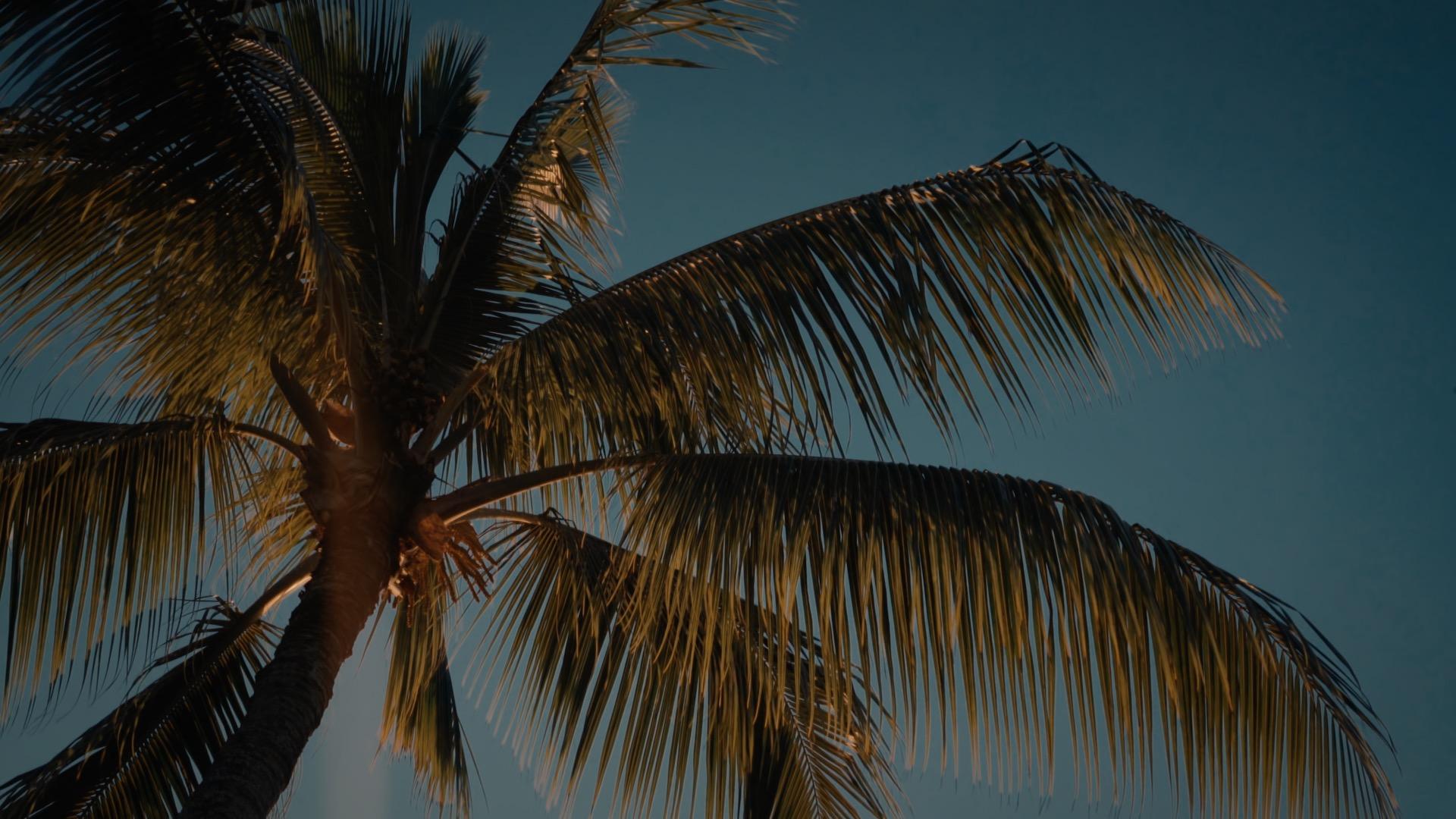 VMC-Palms-09-HD STILL-0.jpg
