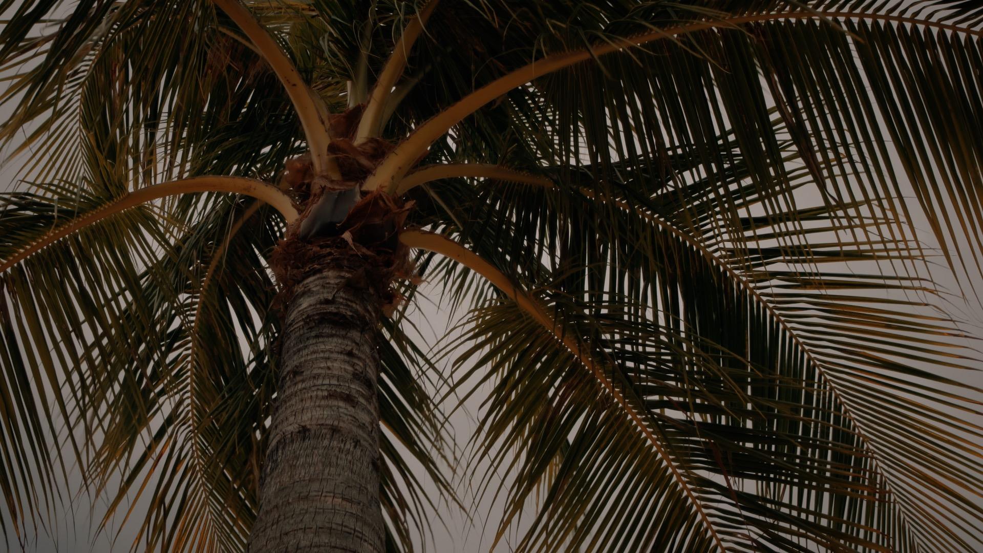 VMC-Palms-15-HD STILL-0.jpg