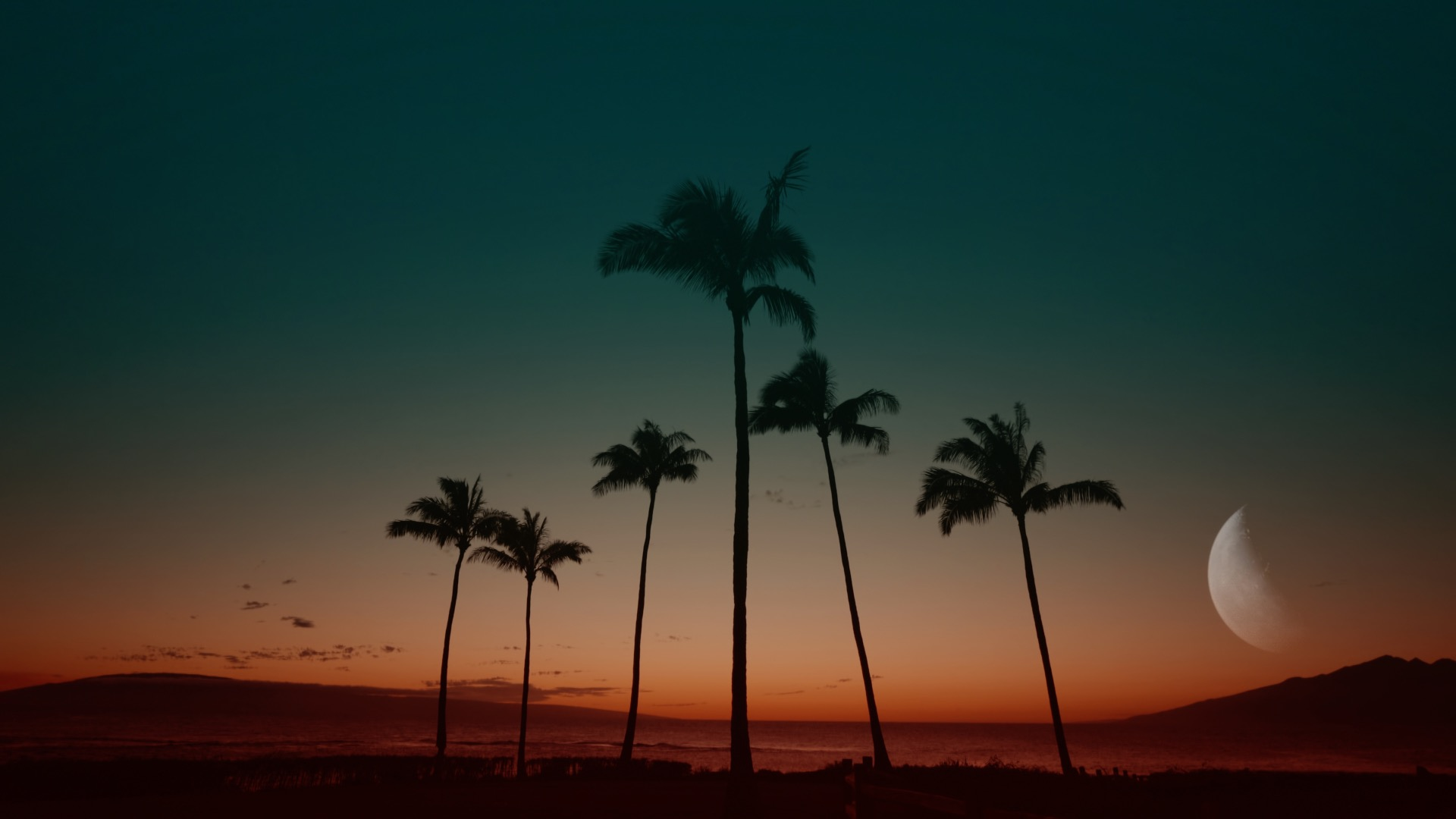 VMC-Palms-Remix-01-HD STILL-0.jpg