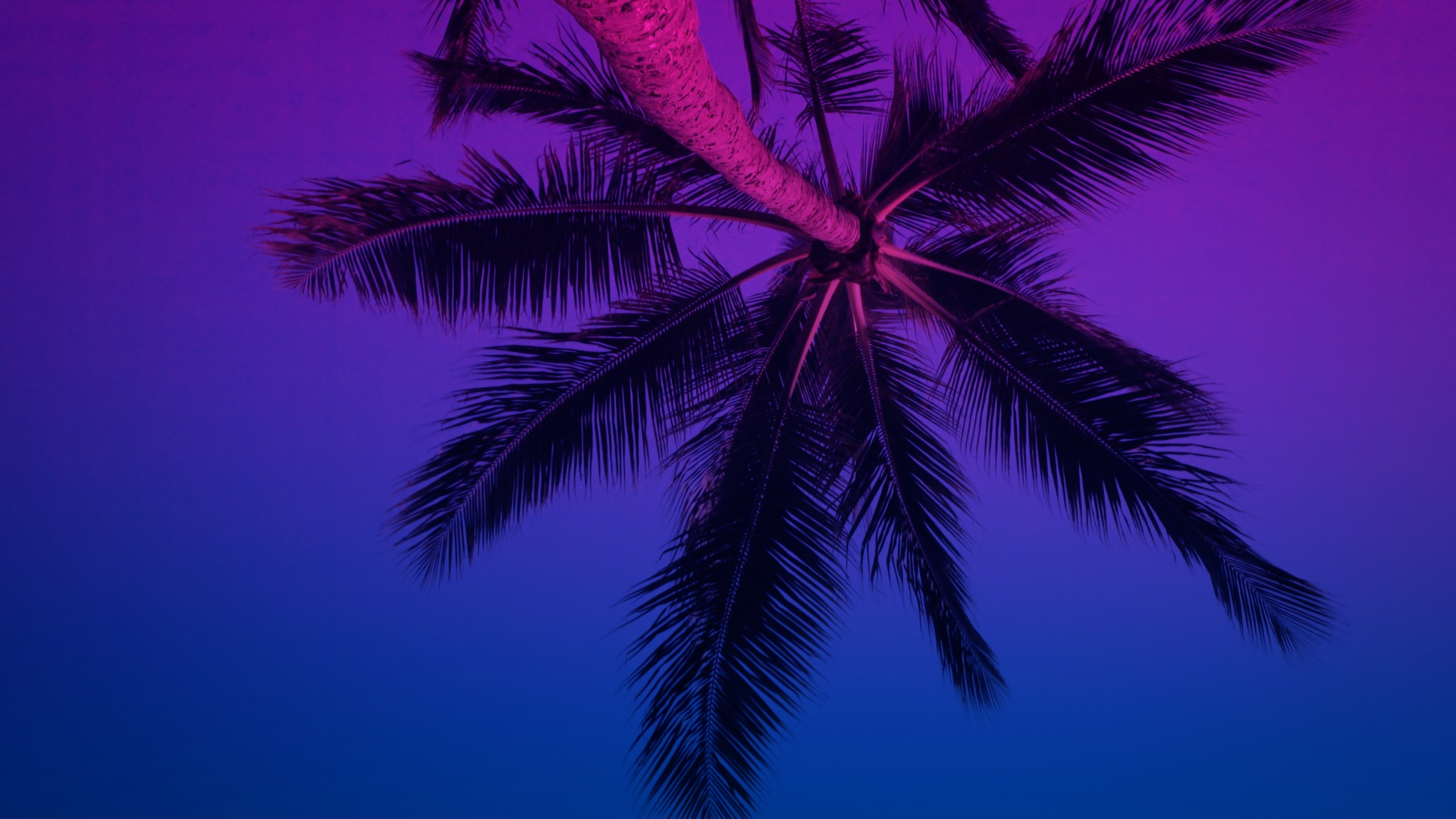 VMC-Palms-Remix-02-HD STILL-0.jpg