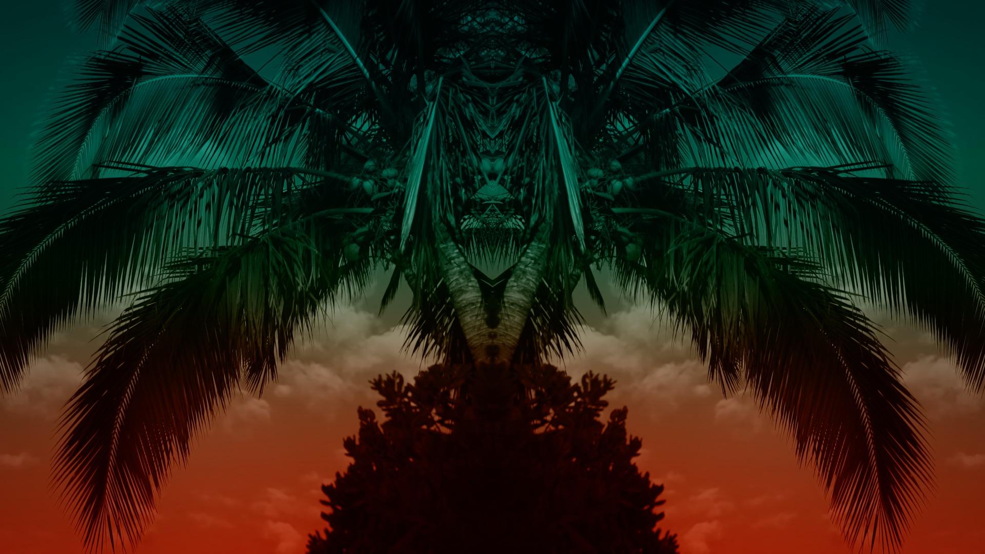 VMC-Palms-Remix-04-HD STILL-0.jpg