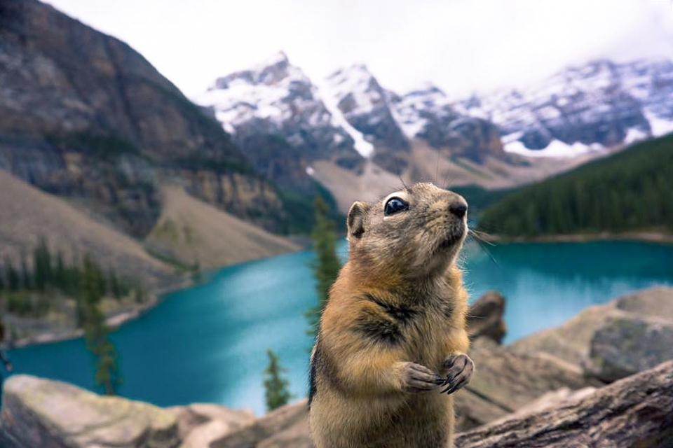 moraine squirrel 2018.jpg