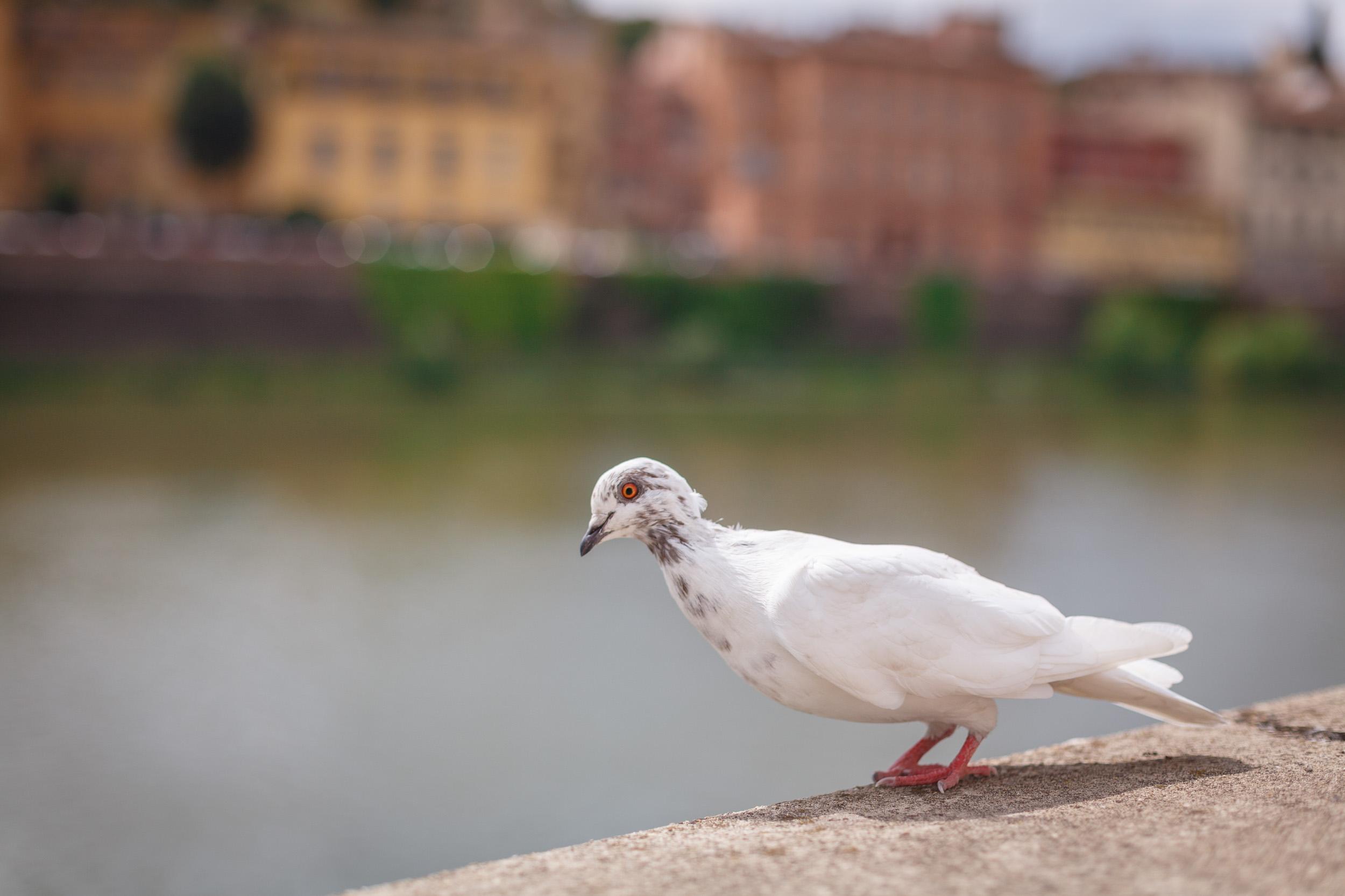 tuscany-2880.jpg