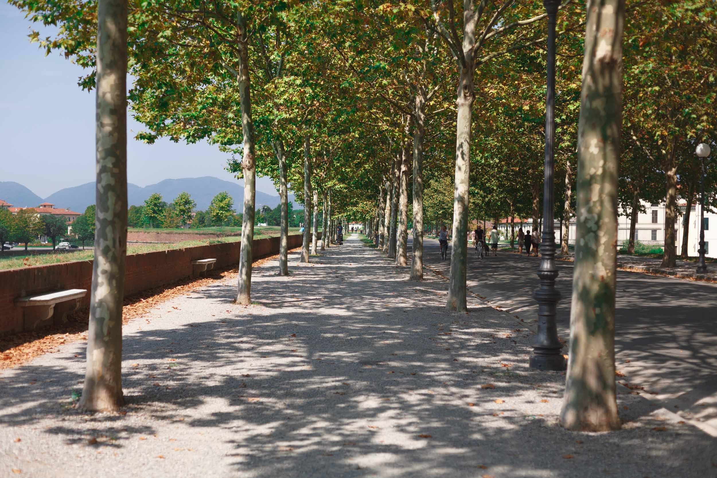tuscany-3130.jpg