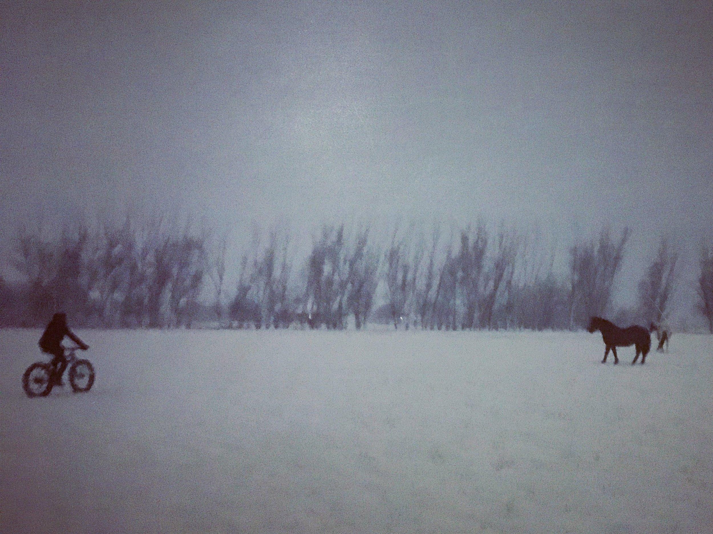 HorseSnapseed.jpg