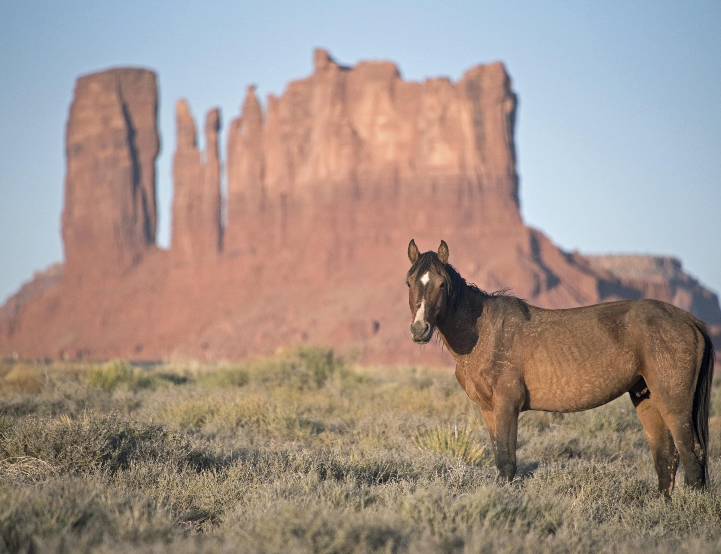 Wild Horses (USA, 2018)