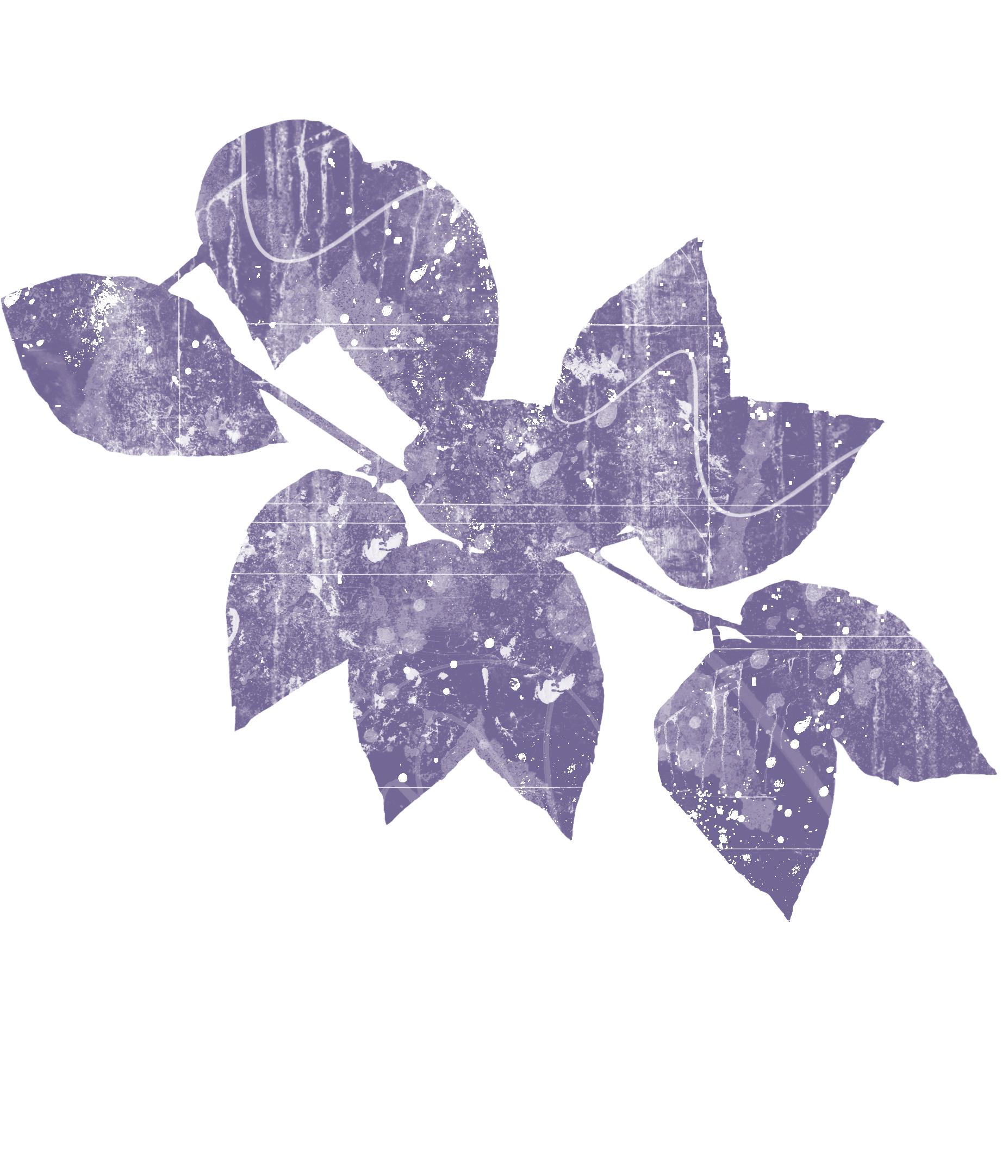 Leaf_MB.jpg