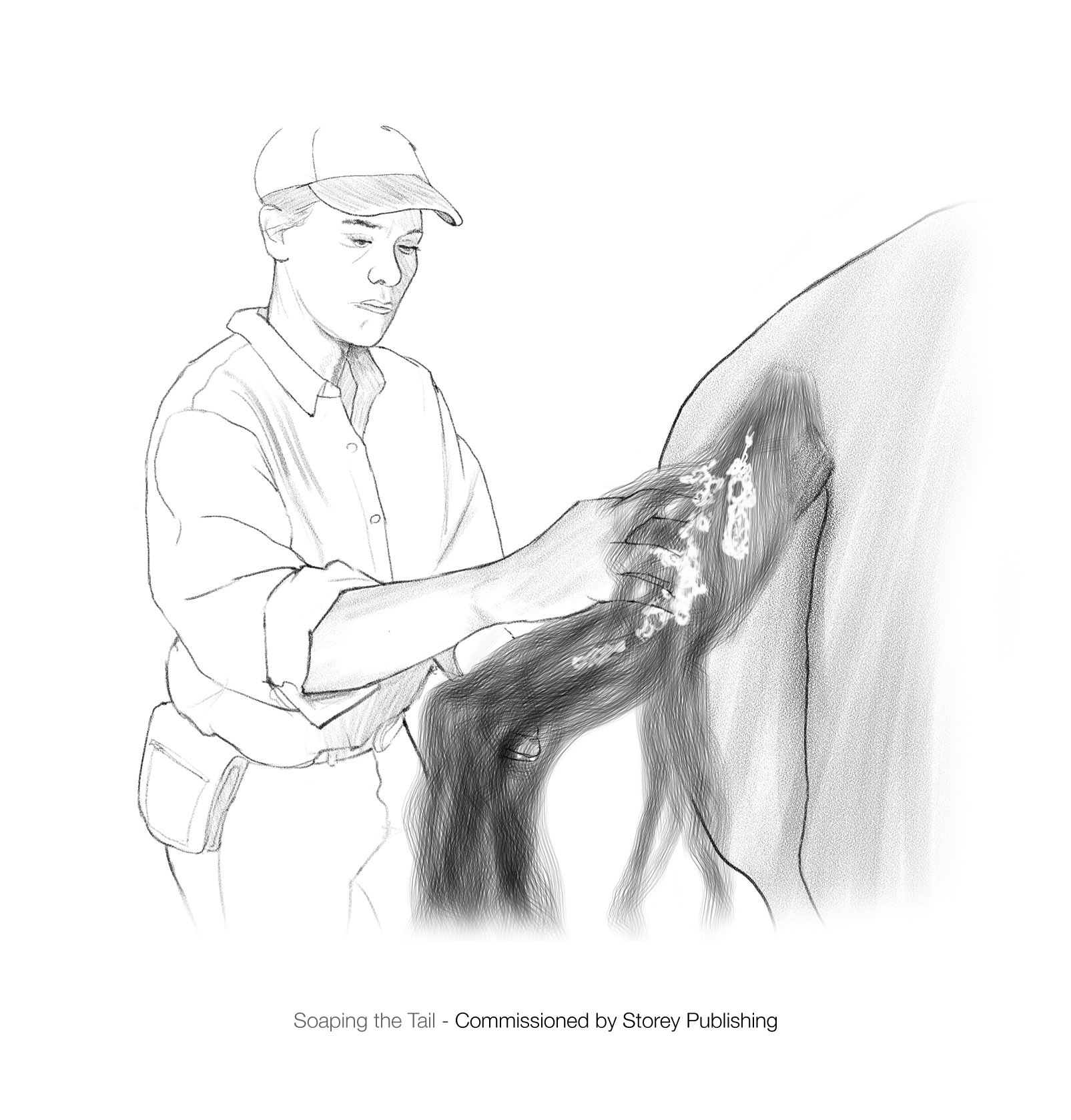 Washing your horse's tail.jpg