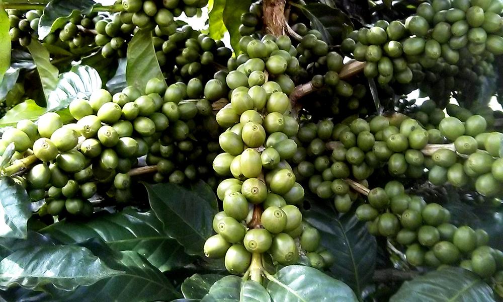 NicaraguaOne1000x600.jpg
