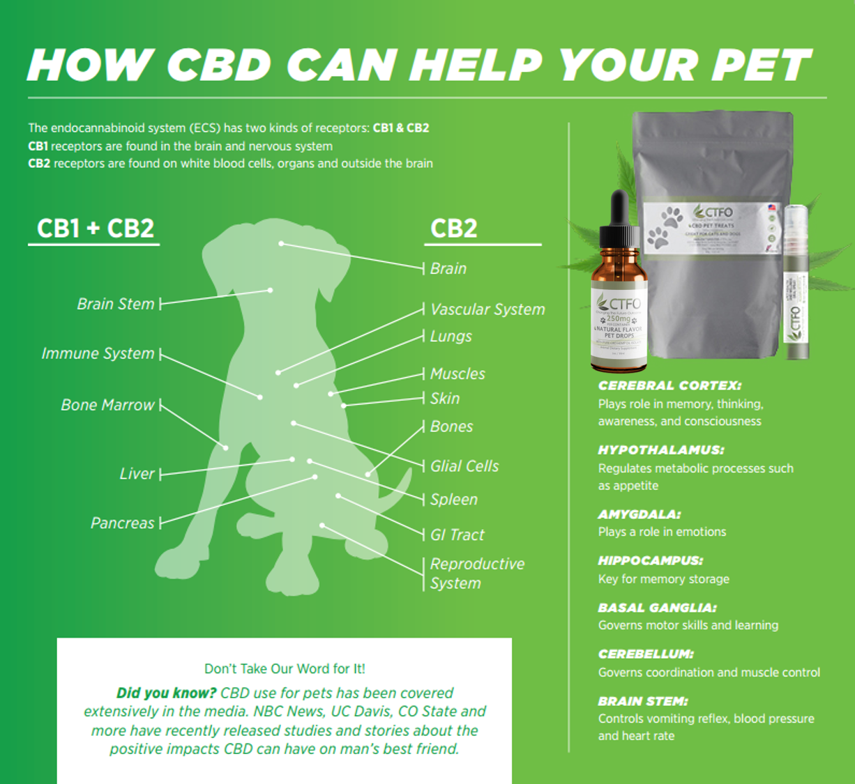 Relief For My Pet How CBD Can Help