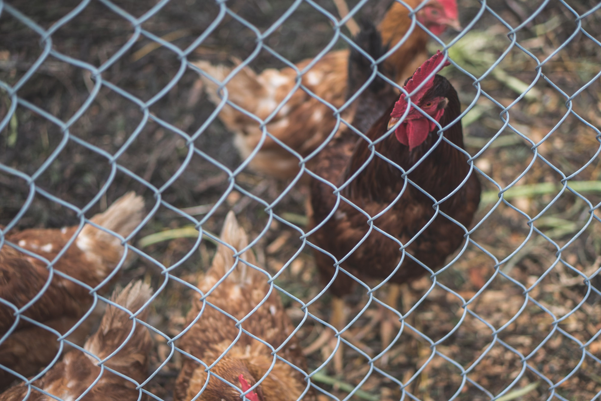 women-who-farm-over-grow-the-system-9.jpg