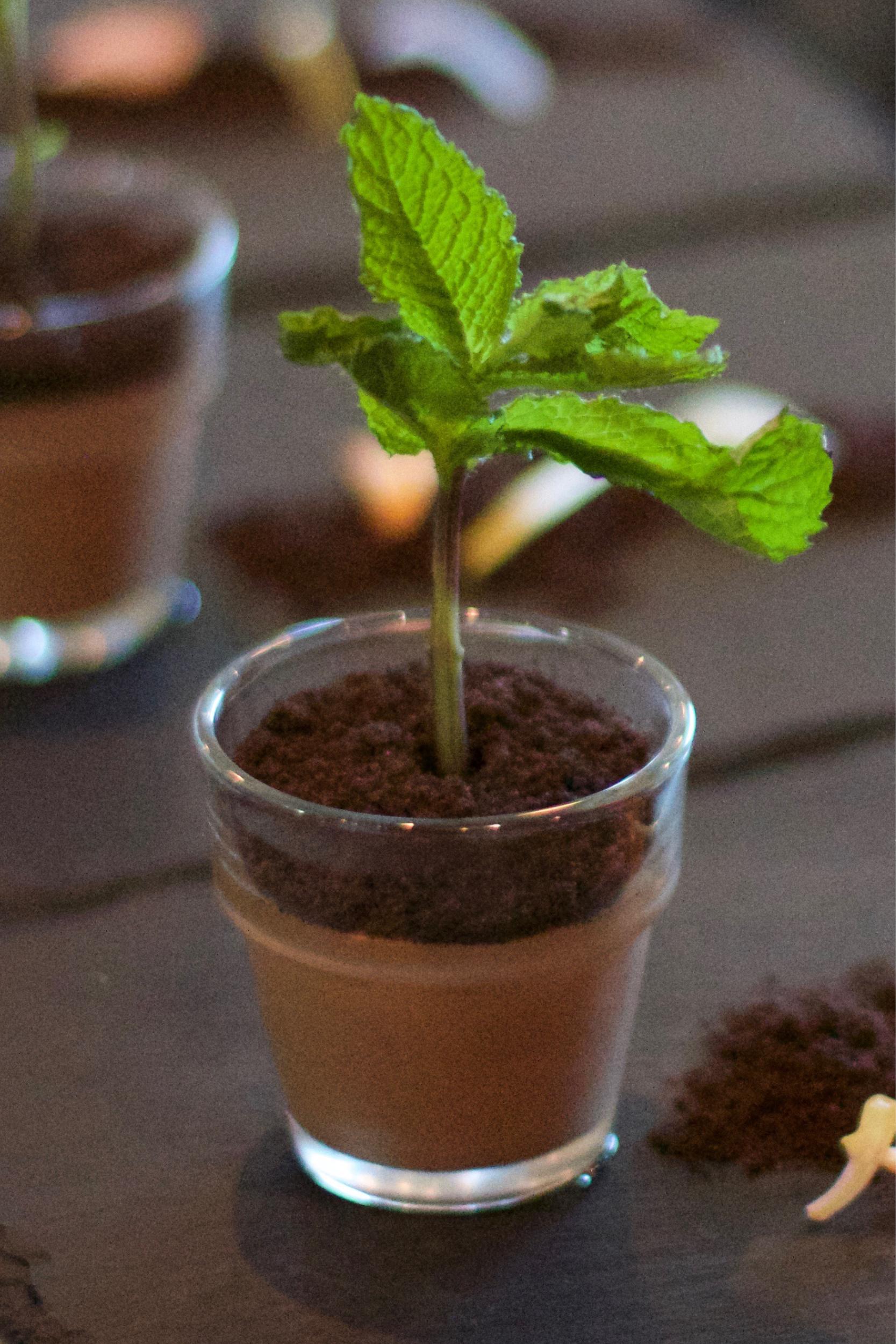 Potted-Plant-Dessert-1.jpg