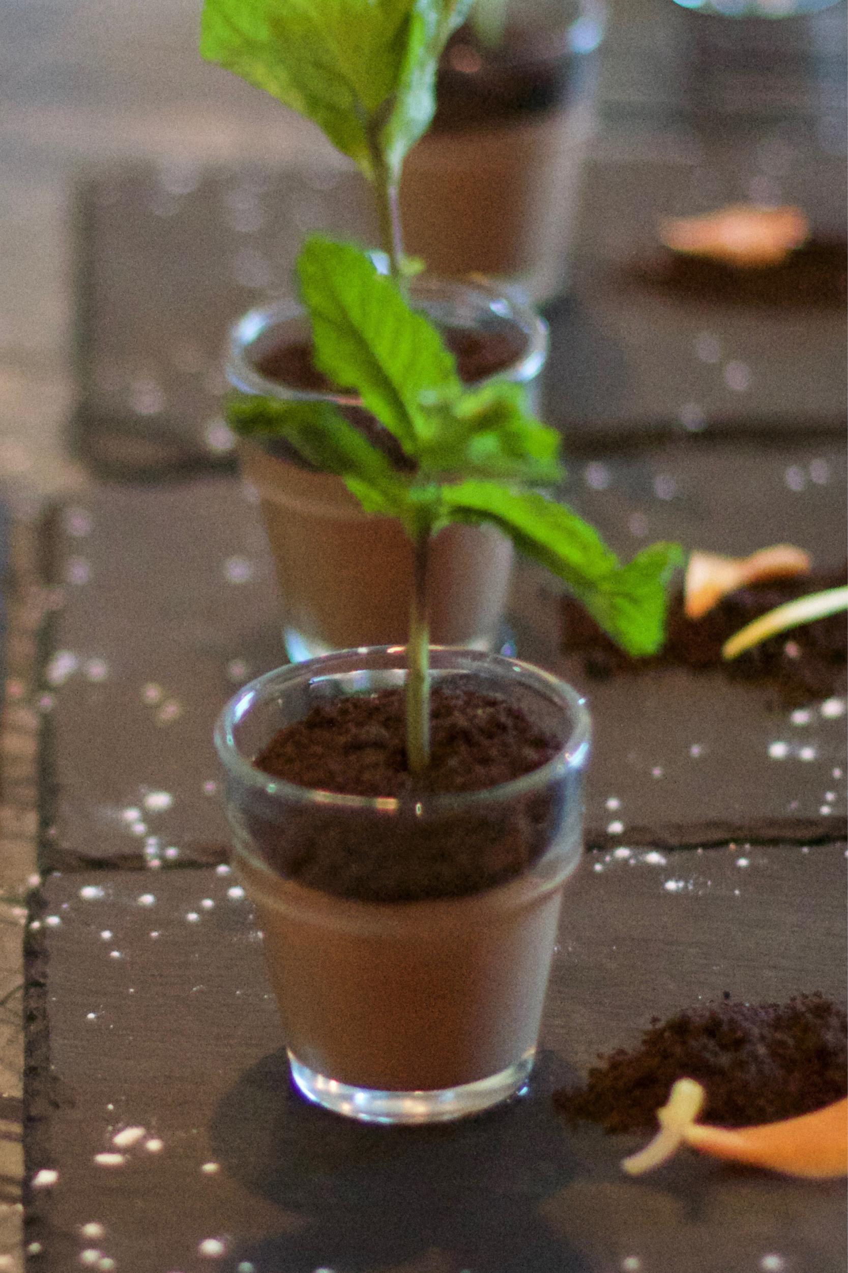 Potted-Plant-Dessert-4.jpg