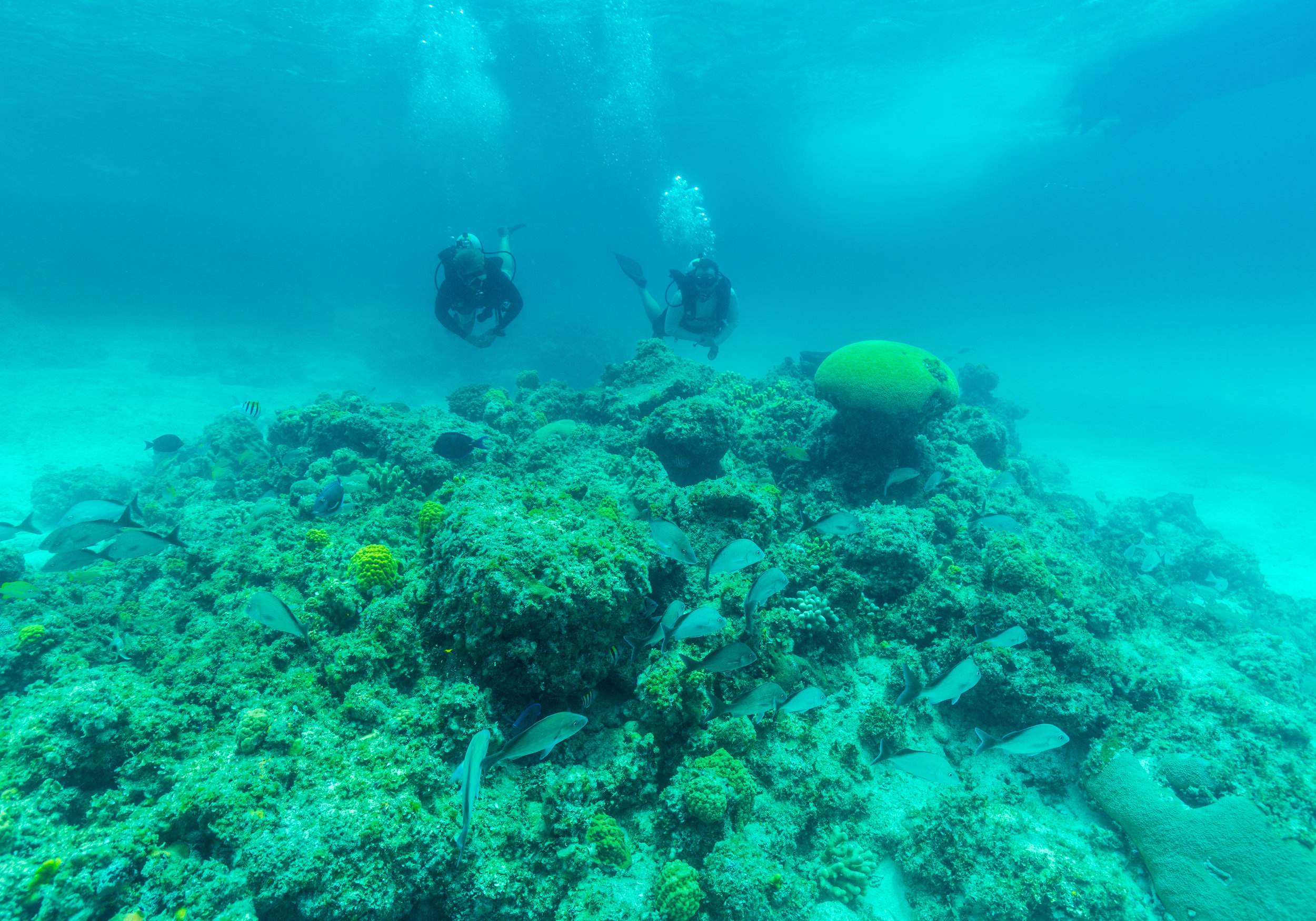 Discover coral reefs and breathtaking underwater life