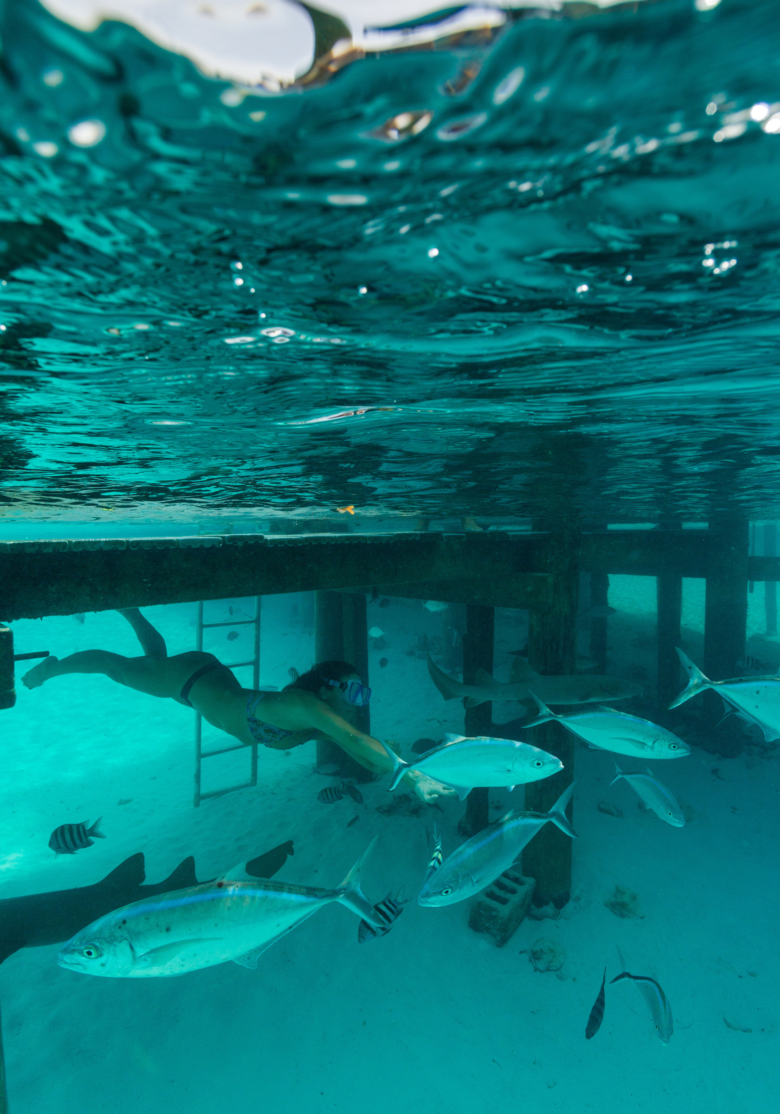 Fun times await in the Exumas swimming with the gentle nurse sharks