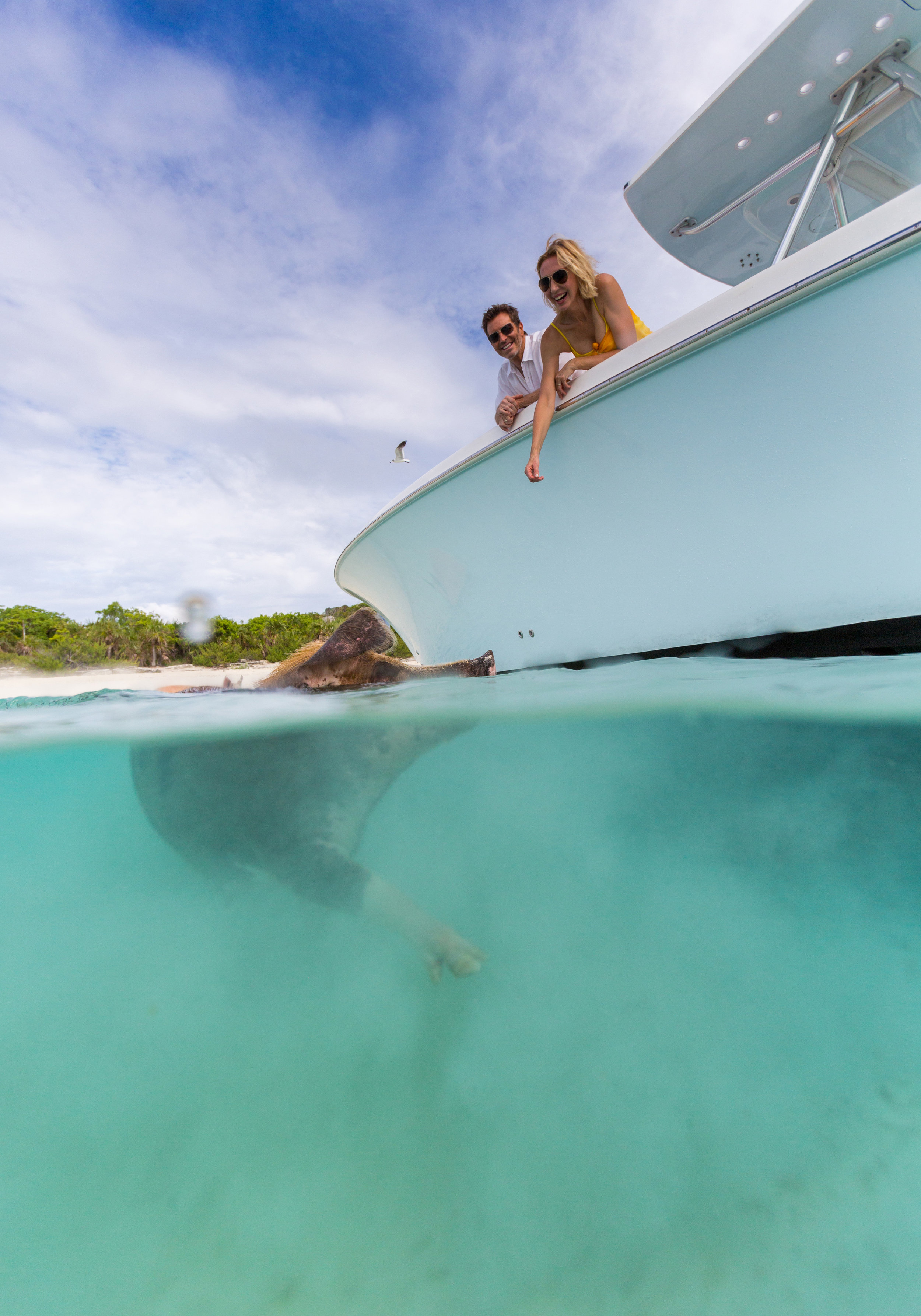 Frolic with the swimming pigs in the Bahamas