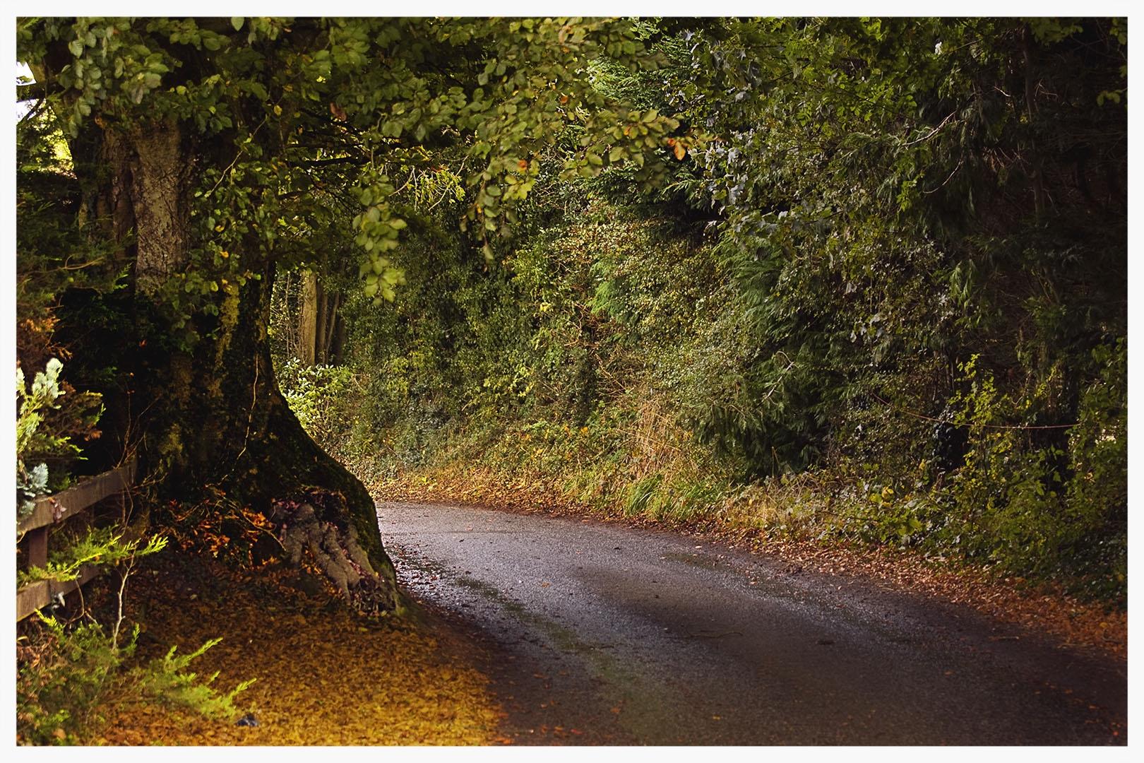 The Golden Road, Connemara,County Galway,Ireland