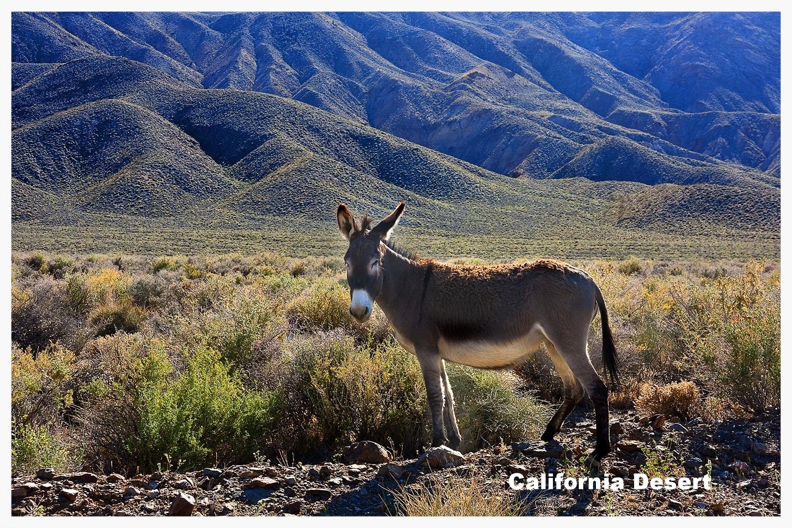 Click to view California Desert Portfolio